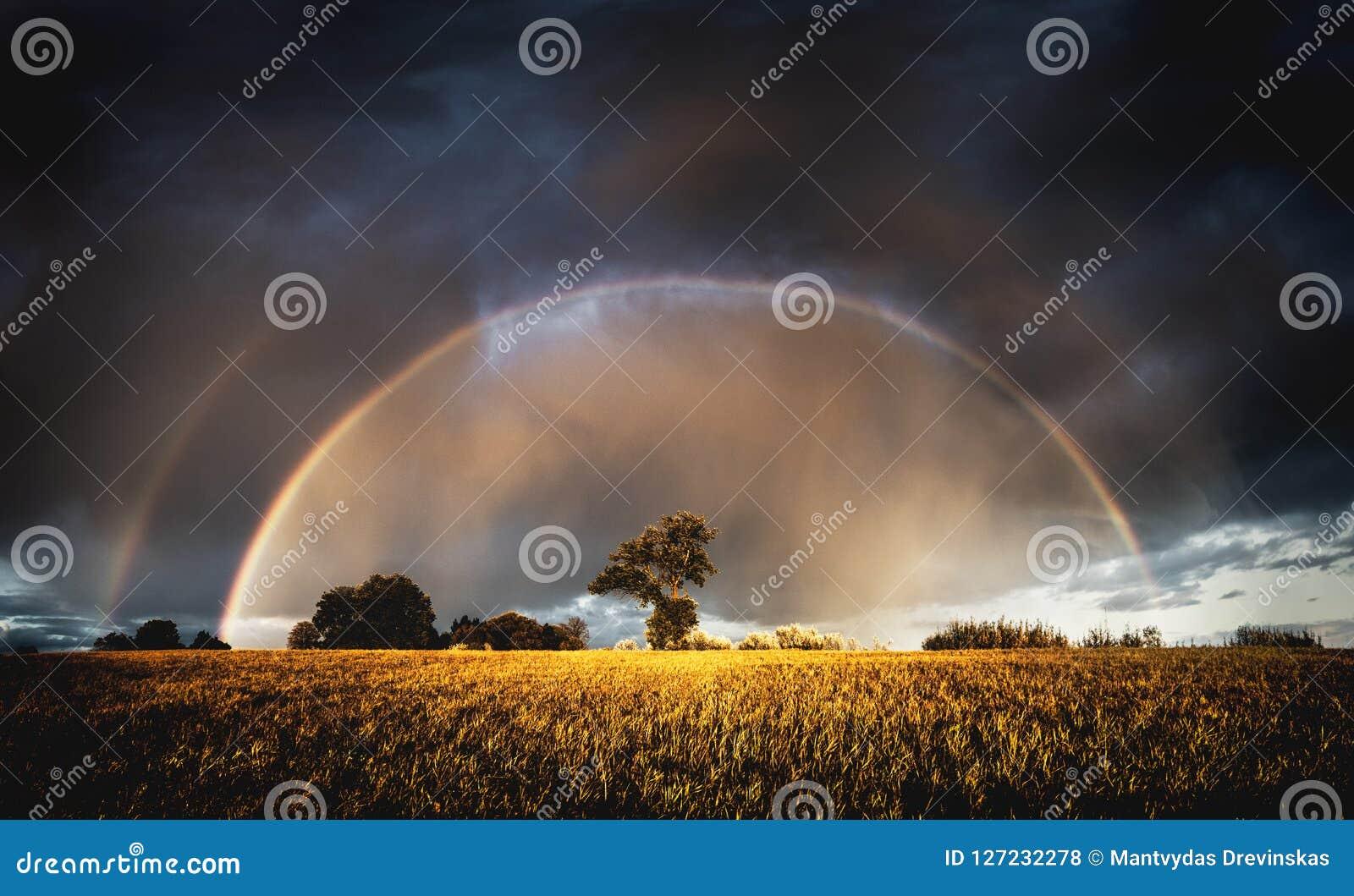Lluvia del otoño por la tarde y arco iris lleno en los campos sobre árboles