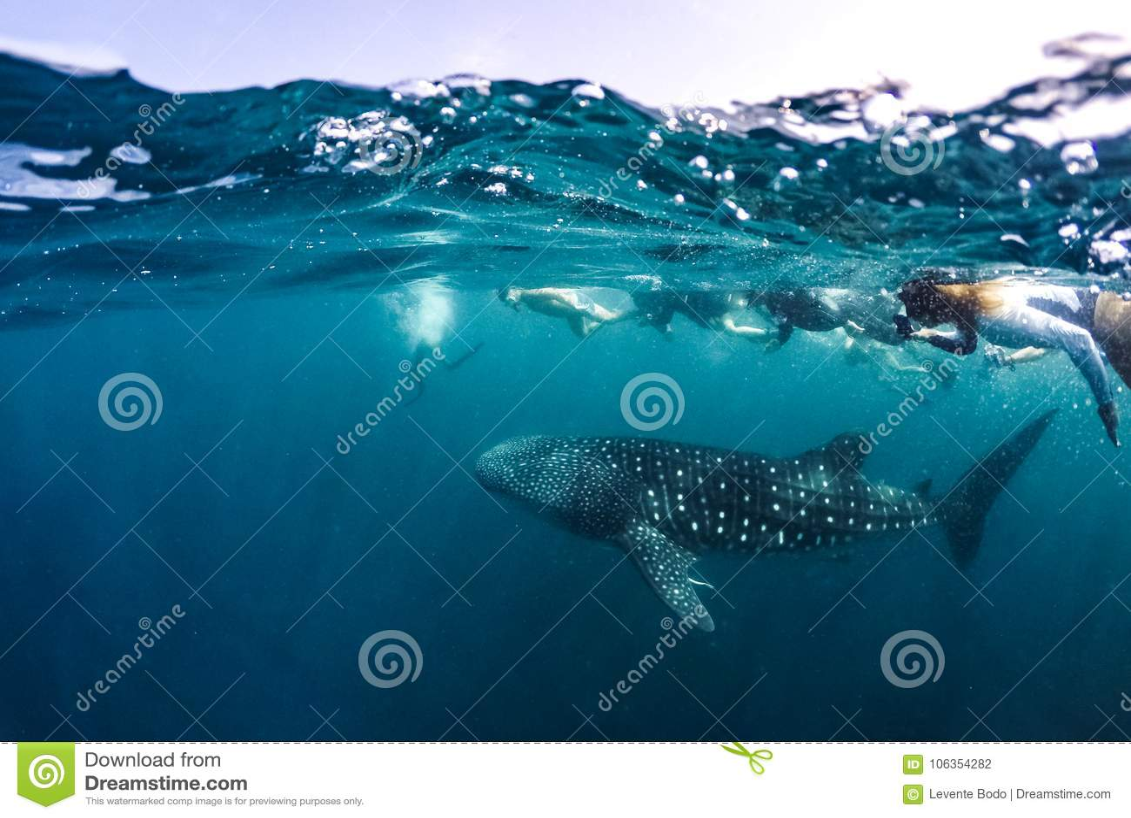 Lo squalo balena e la gente si immergono la vita marina di scena subacquea al sole nel mare blu Immergersi e scuba Maldive underw