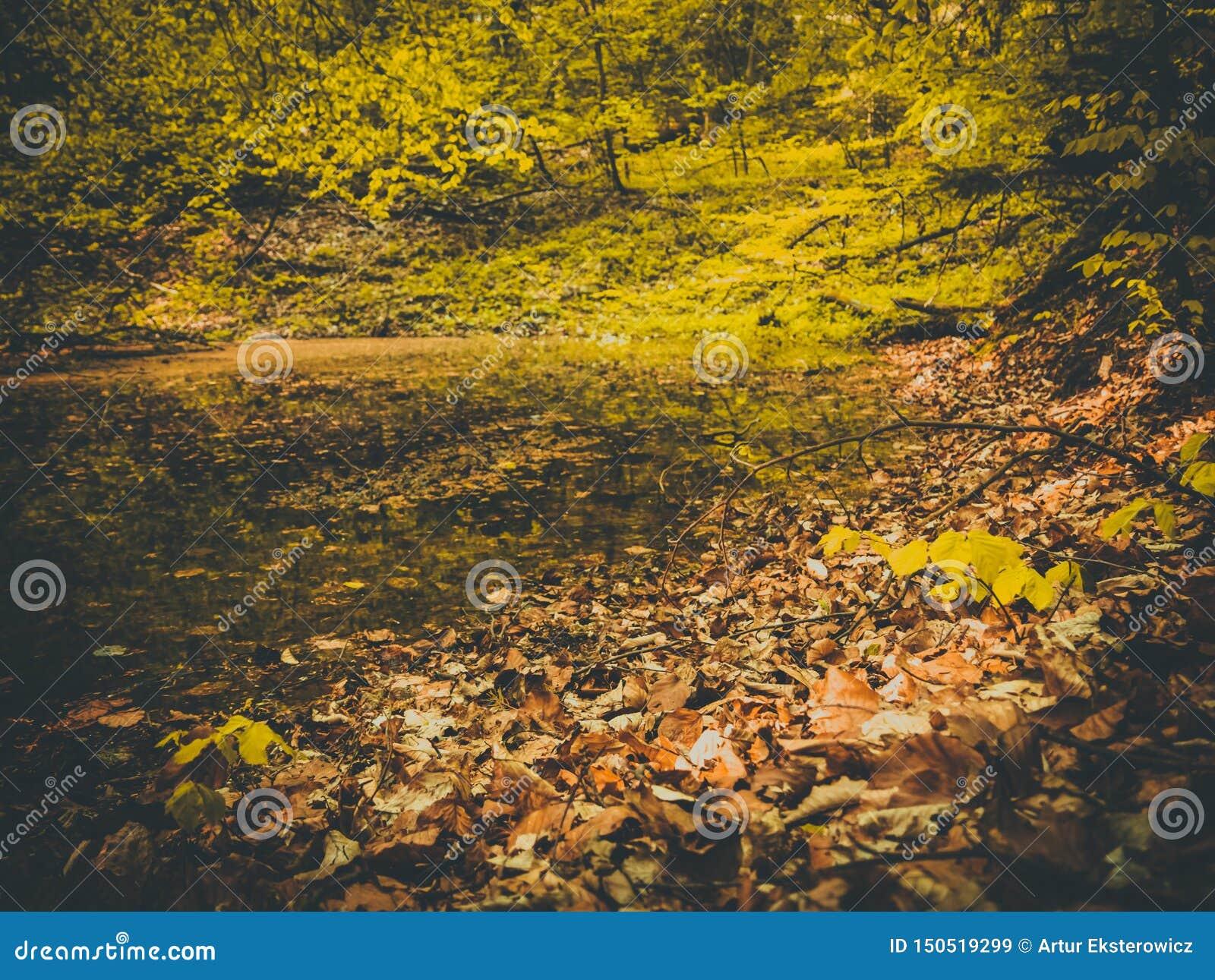 Lo stagno ha luogo in autunno bagnato in foglie variopinte