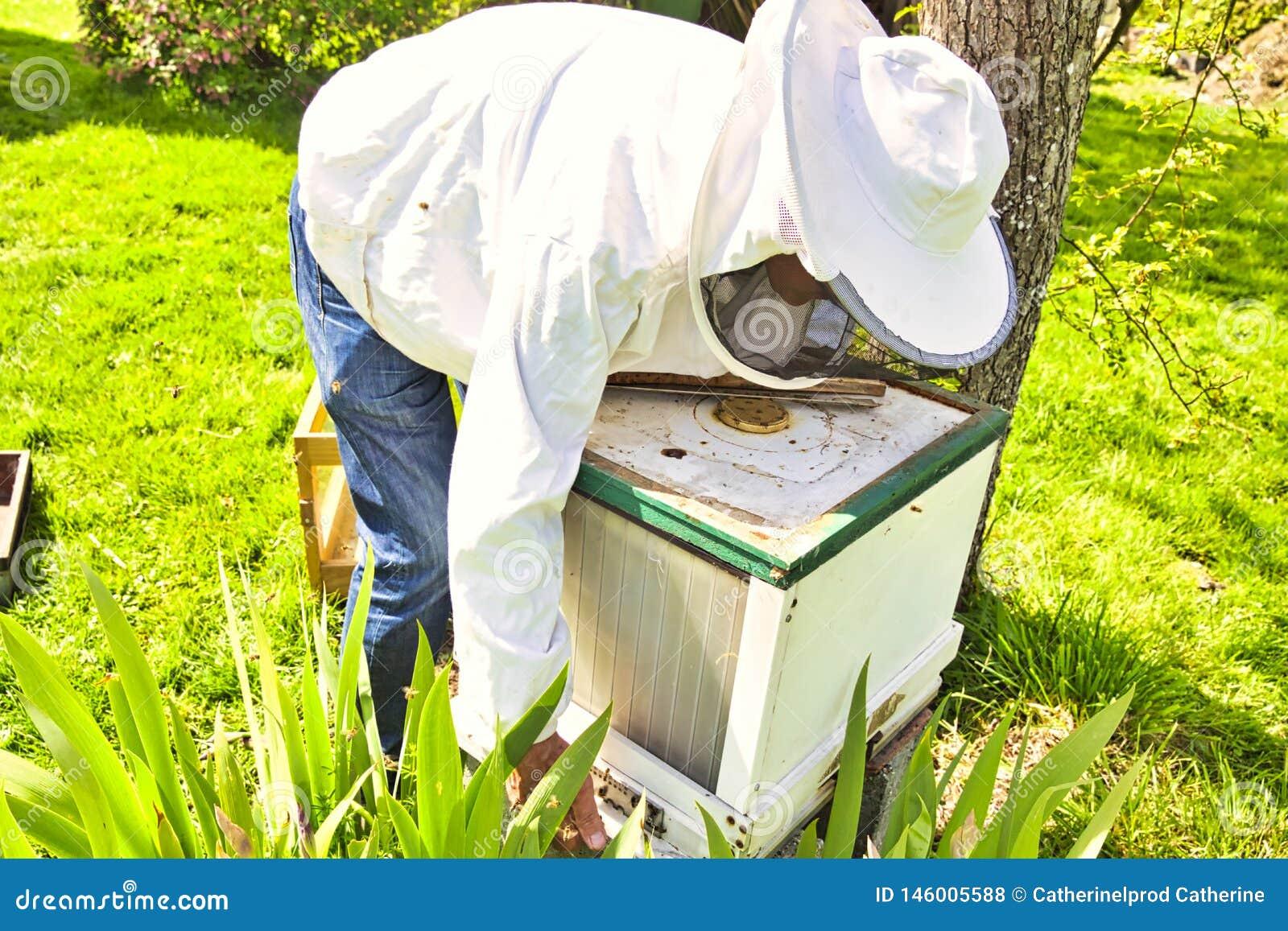 Lo studio delle api ? conosciuto come melittology Questo apicoltore ? pronto a verificare l alveare mentre indossa il vestiario d