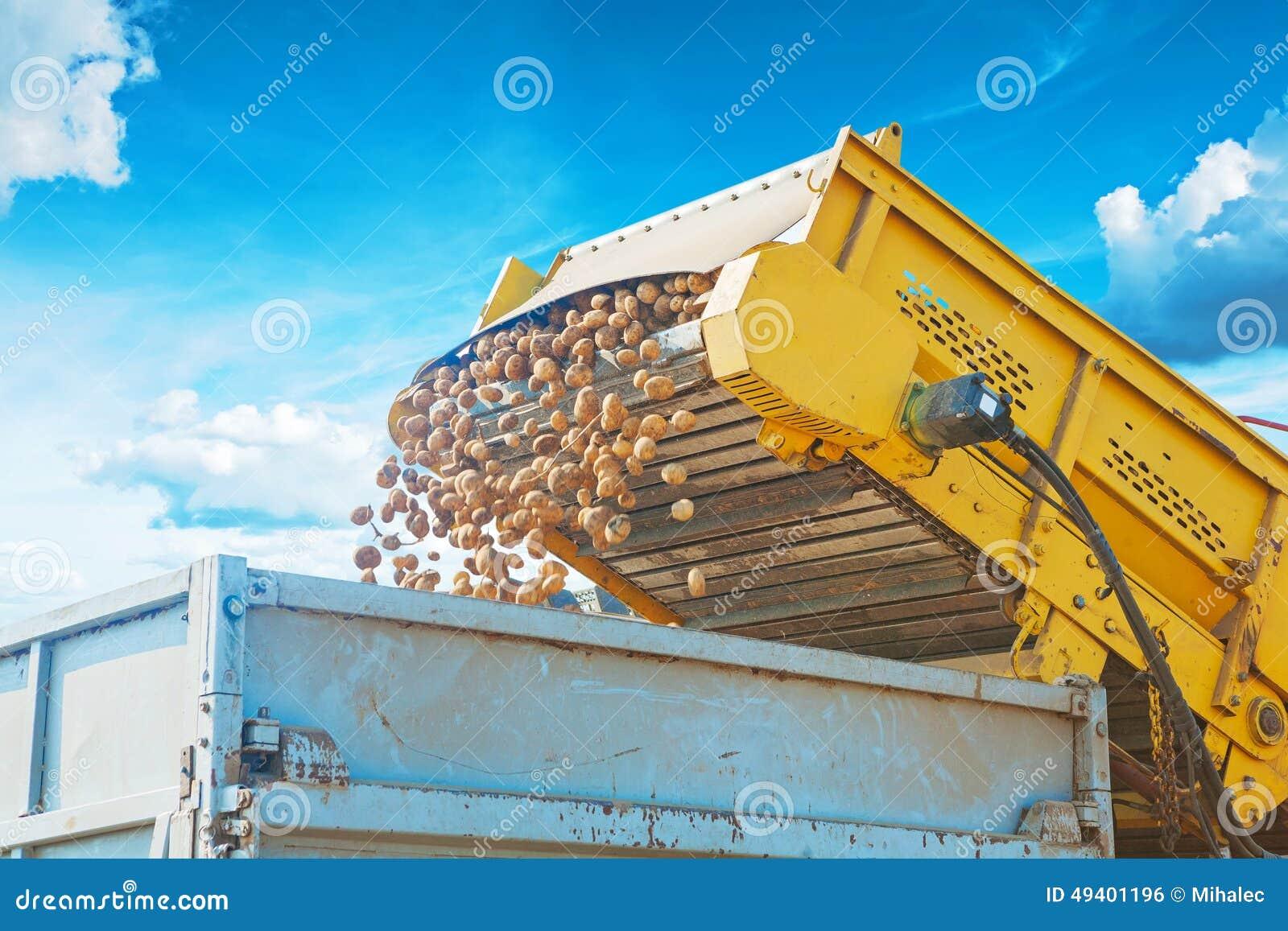 Download Loadding-Kartoffel In Kipper An Der Ernte An Stockfoto - Bild von nahrung, industrie: 49401196