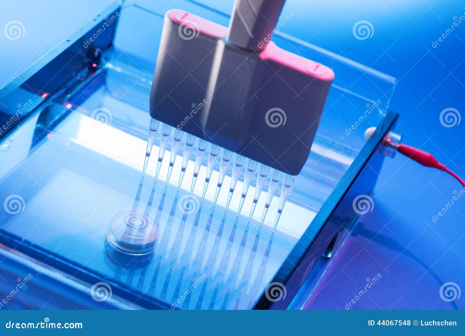 loading dna samples onto an agarose gel electrophoresis
