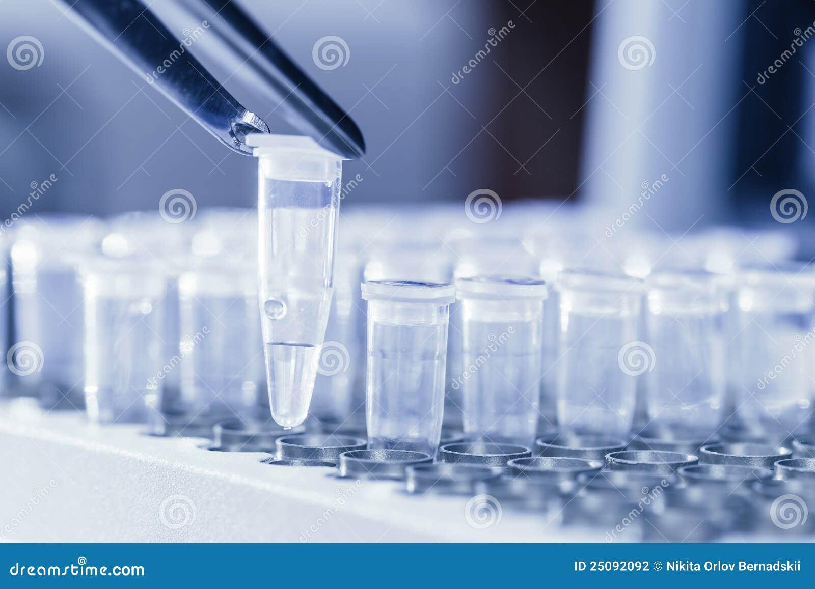 loading dna samples for pcr stock photo