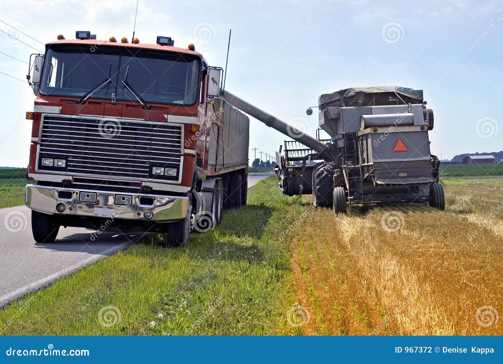 Loading Grain for Transport
