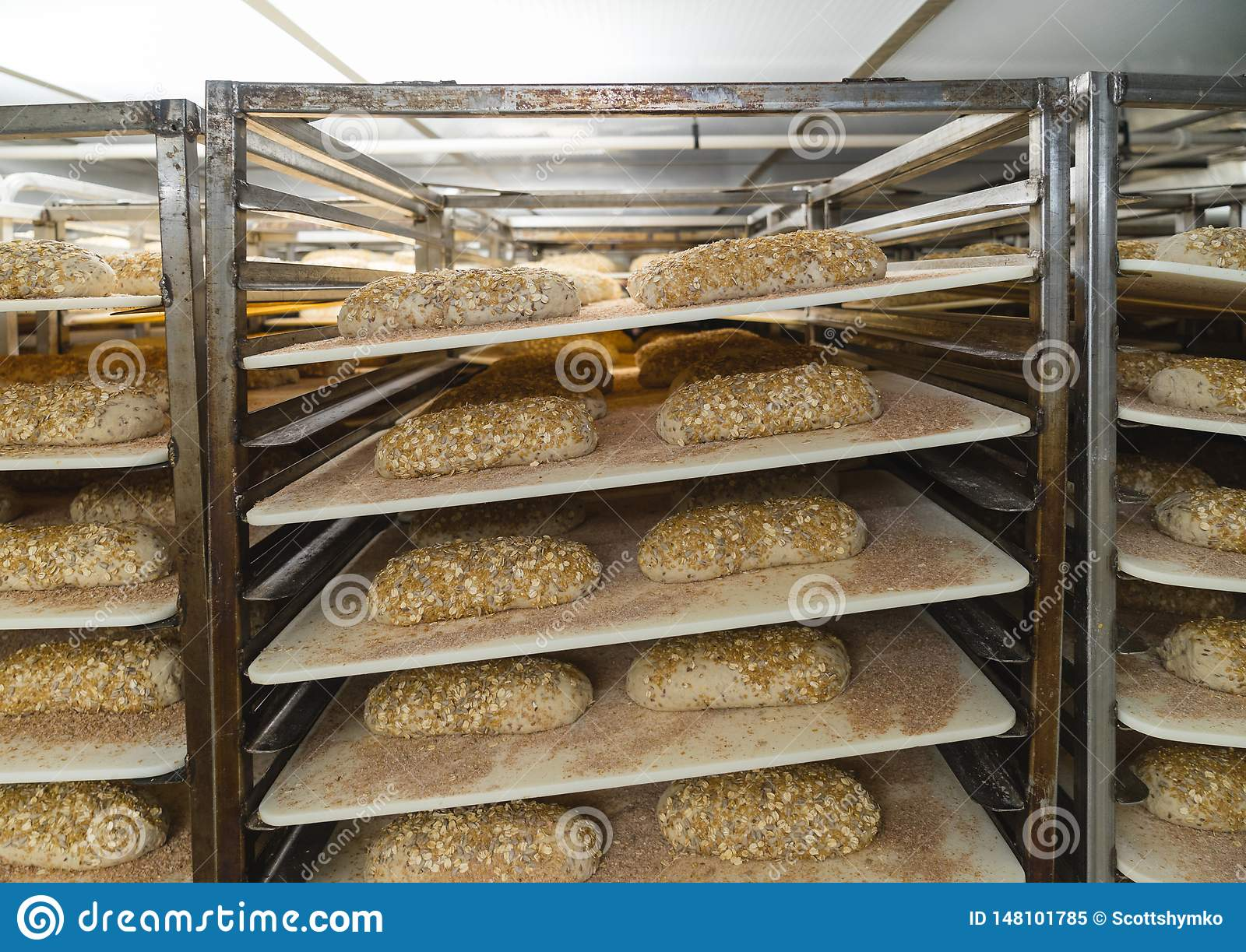 Loaves of bread in a proofing room
