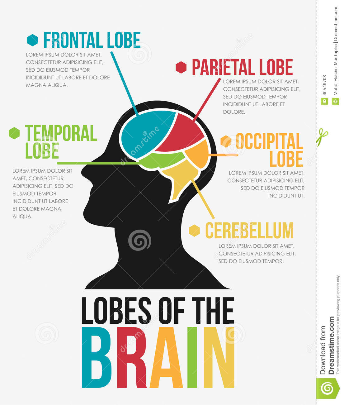 3 basic parts of the brain