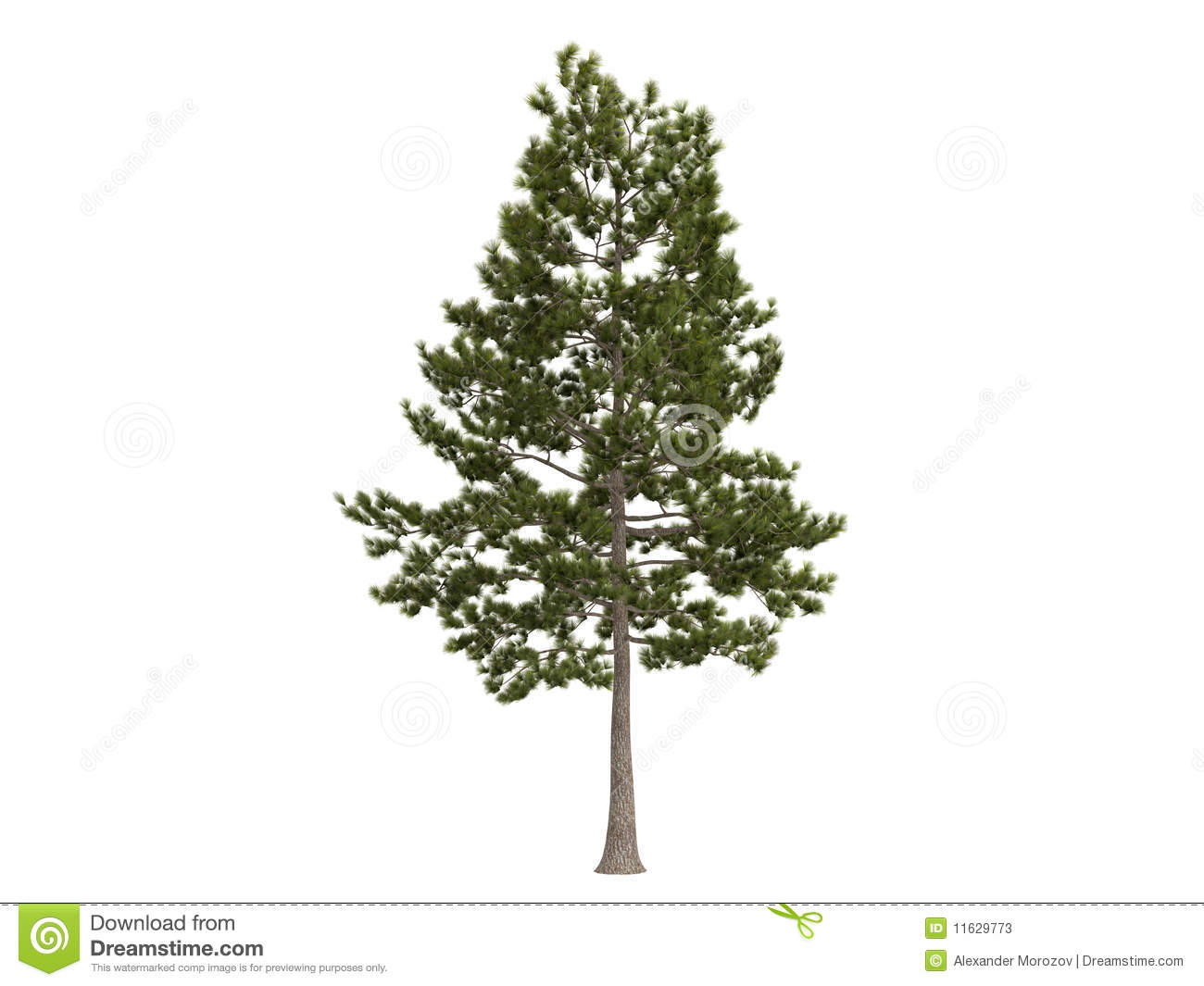 Pin Isolated Pine Cone Tree Branch Vector Graphics on Pinterest