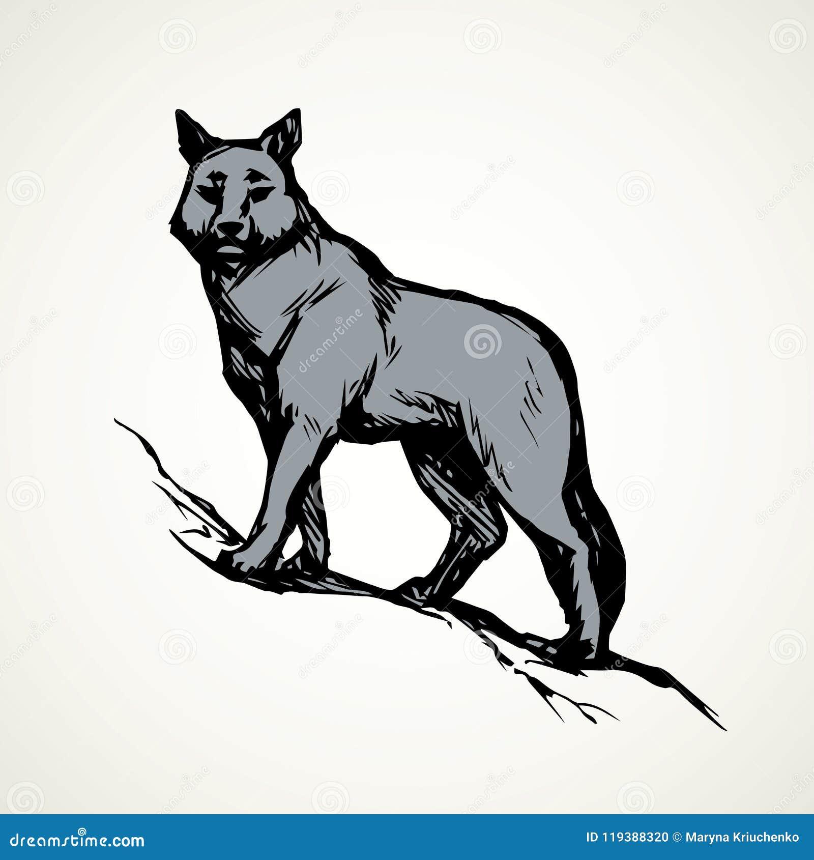 Lobo Desenho Do Vetor Ilustracao Do Vetor Ilustracao De Animal