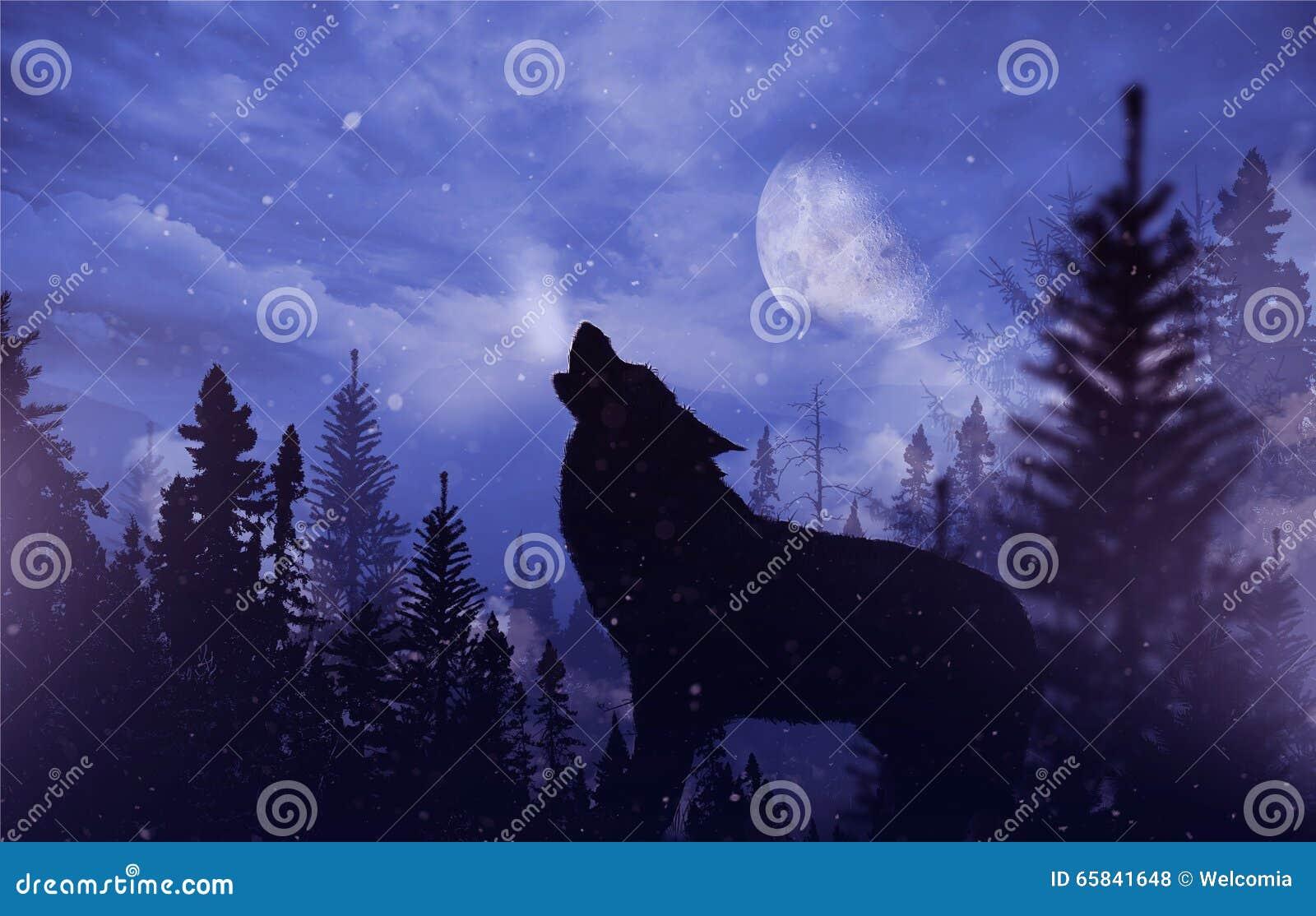 Lobo do urro na região selvagem