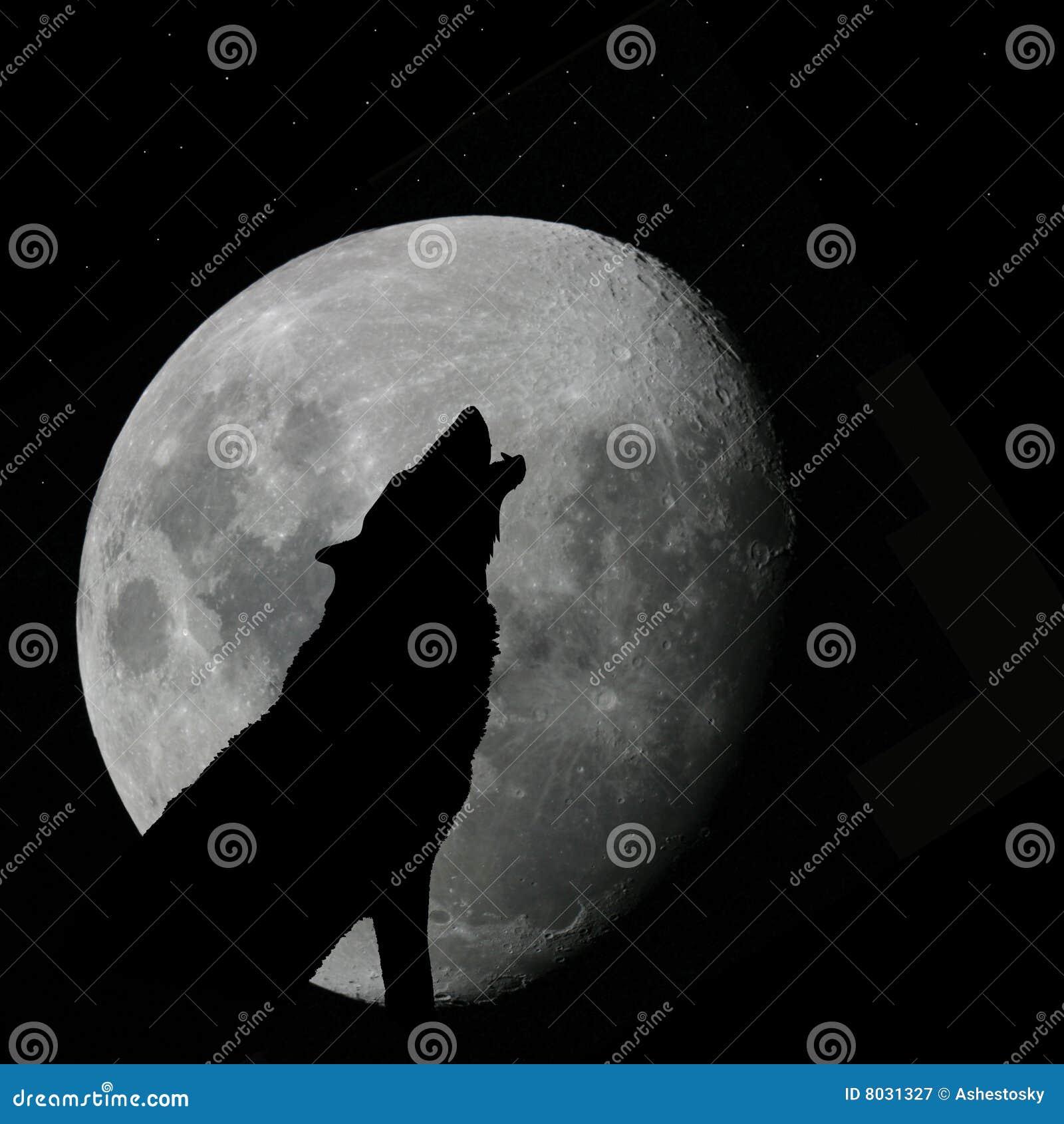 Lobo que grita en la Luna Llena