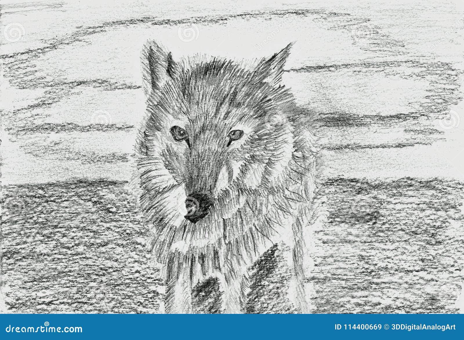 Lobo Solo Lupus Dibujo De Lápiz Ilustración Del Vector