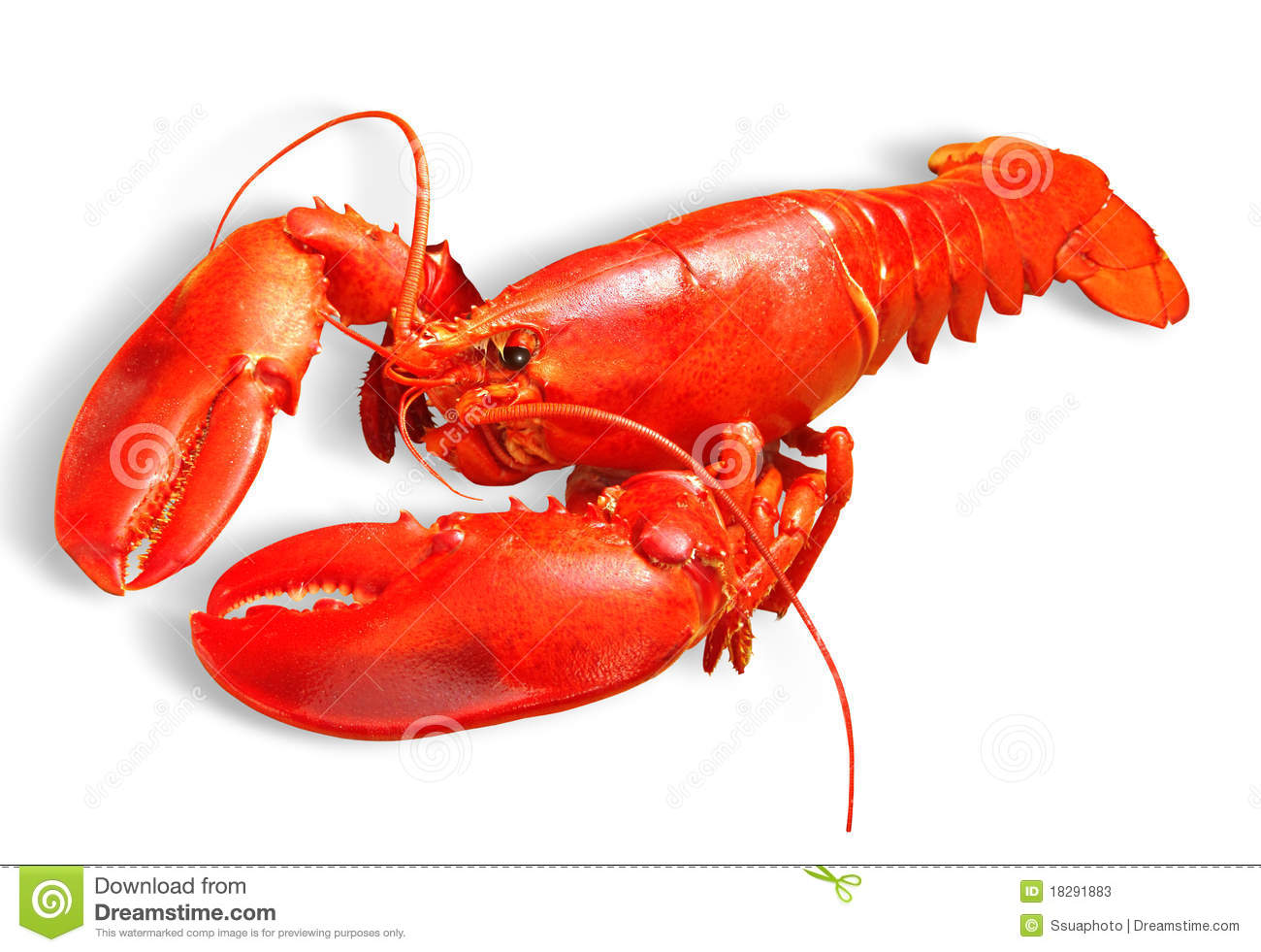 Lobster Stock Photos - Image: 18291883