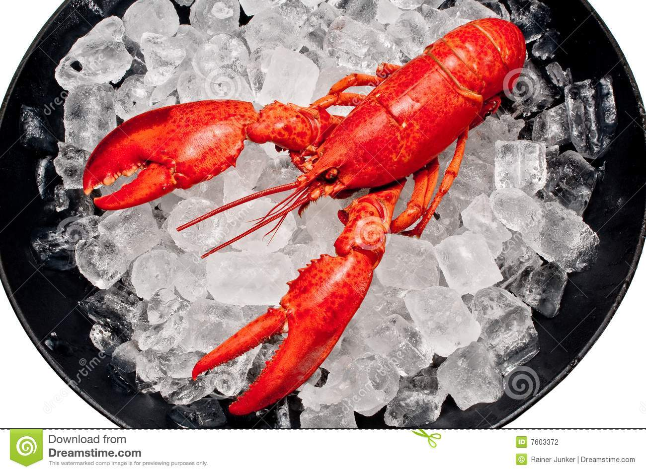 Lobster Stock Photography - Image: 7603372