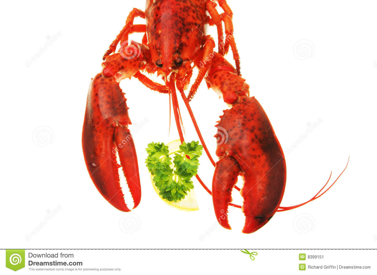 Lobster claws and head stock image. Image of garnish, cooked - 8399151