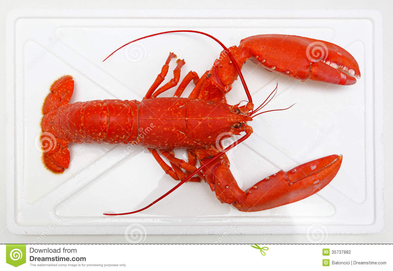 Cooked seafood orange lobster with big claws.