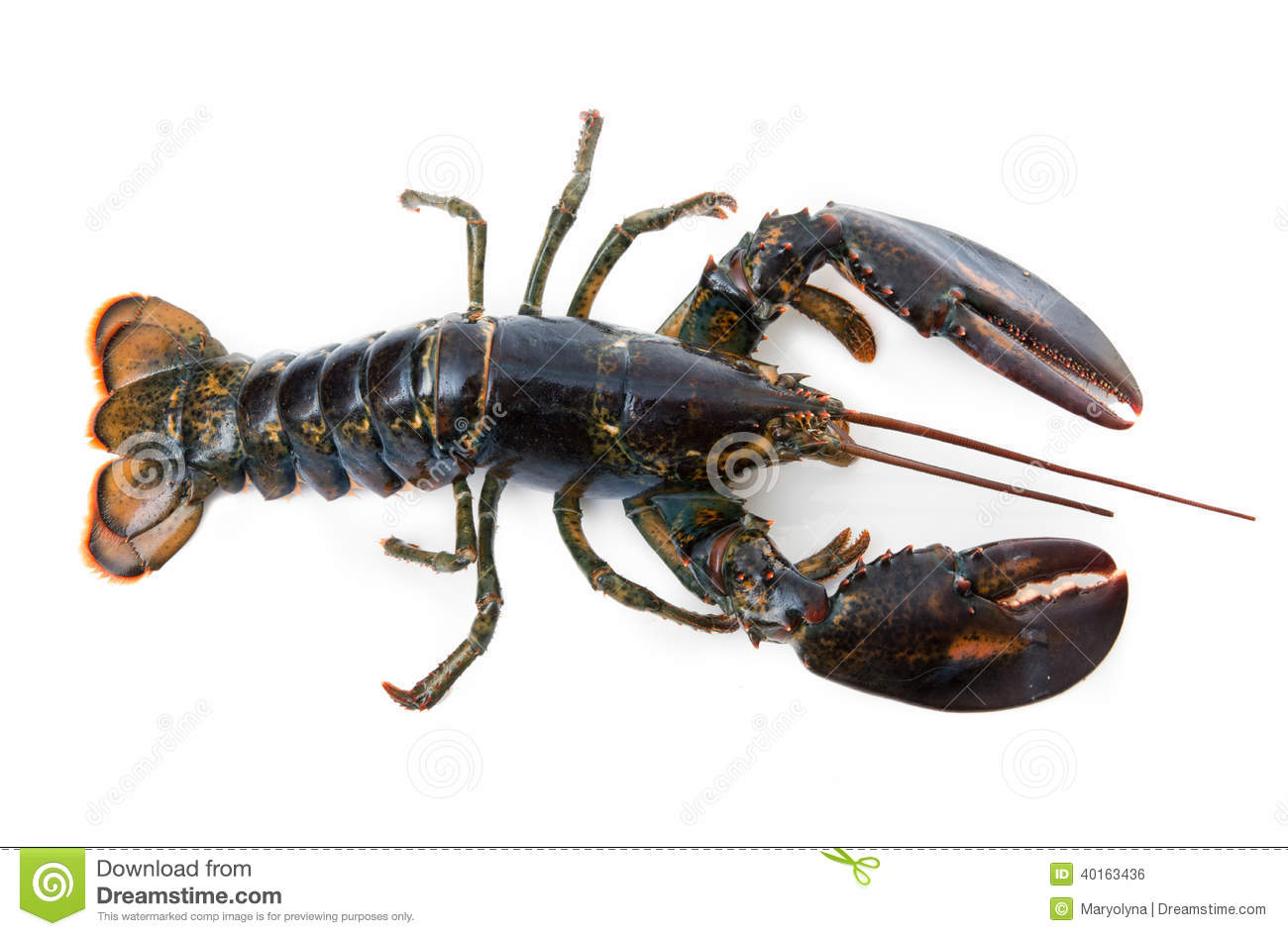 Lobster Stock Photo - ...