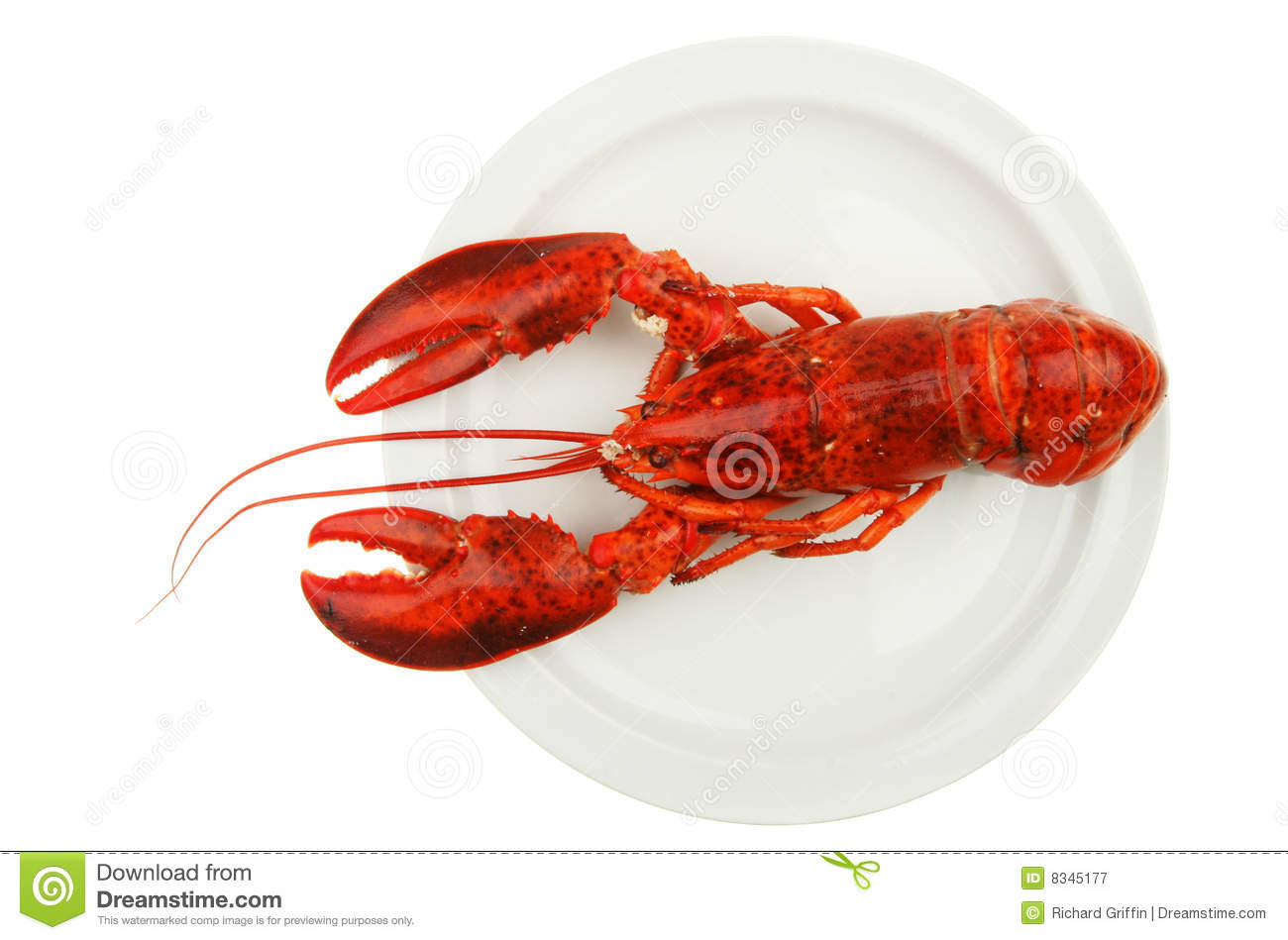 Lobster On Plate Royalty Free Stock Photography - Image: 8345177