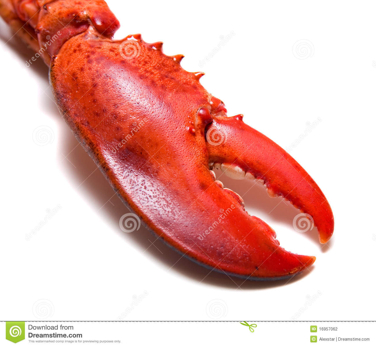 Lobster's Claw Stock Photography - Image: 16957062