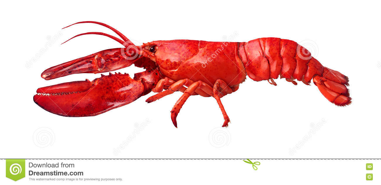 M And S Food Lobster