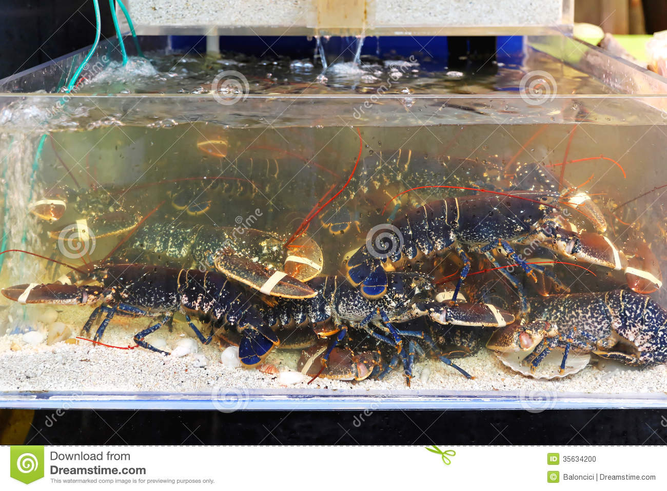 Lobster in tank stock photo. Image of crustaceans, food - 35634200