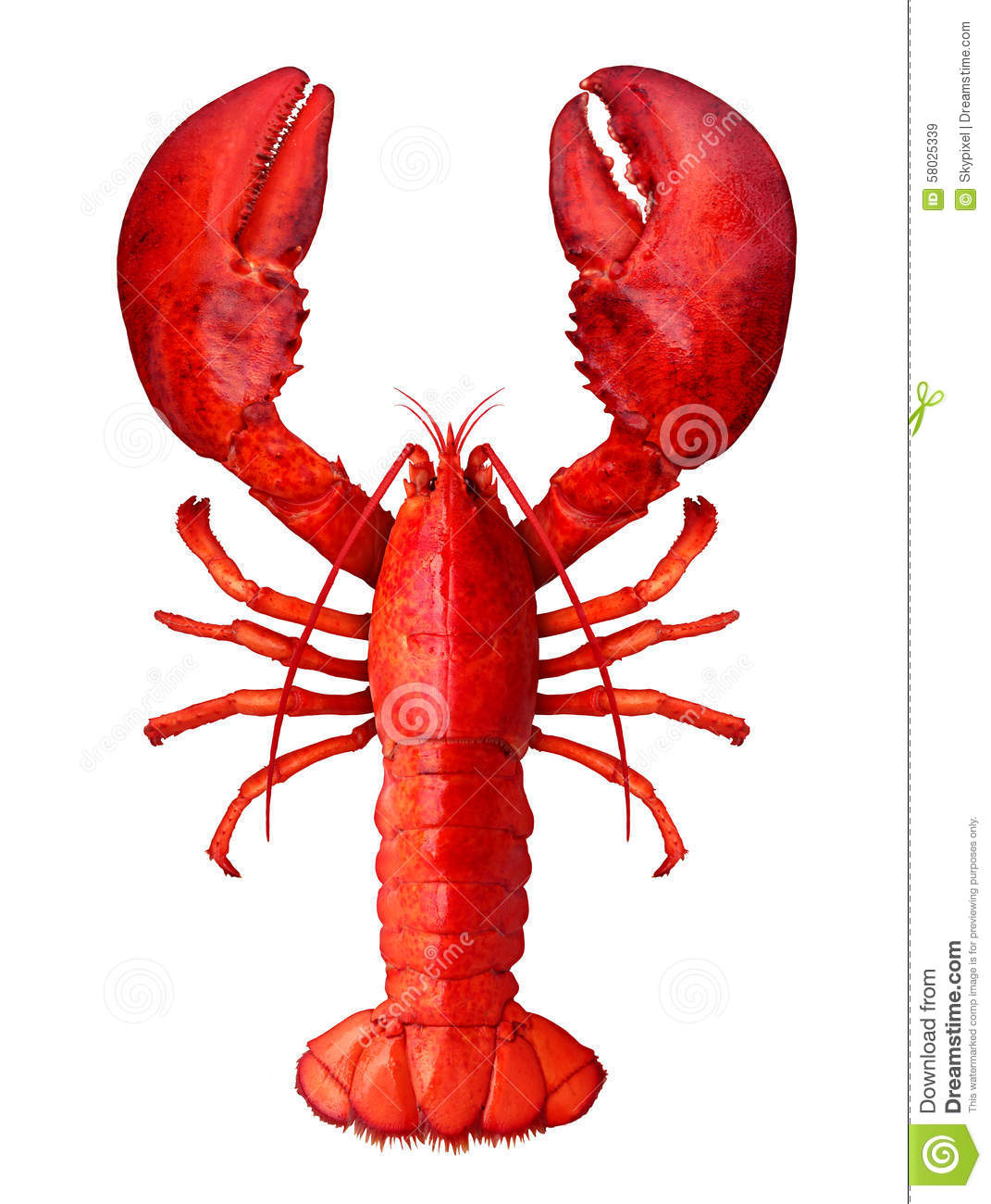 Lobster Stock Illustration - Image: 58025339