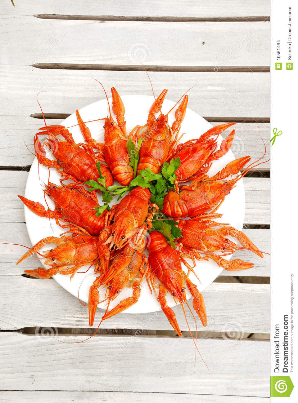 Download Lobsters on a plate stock photo. Image of claw, green - 10561494