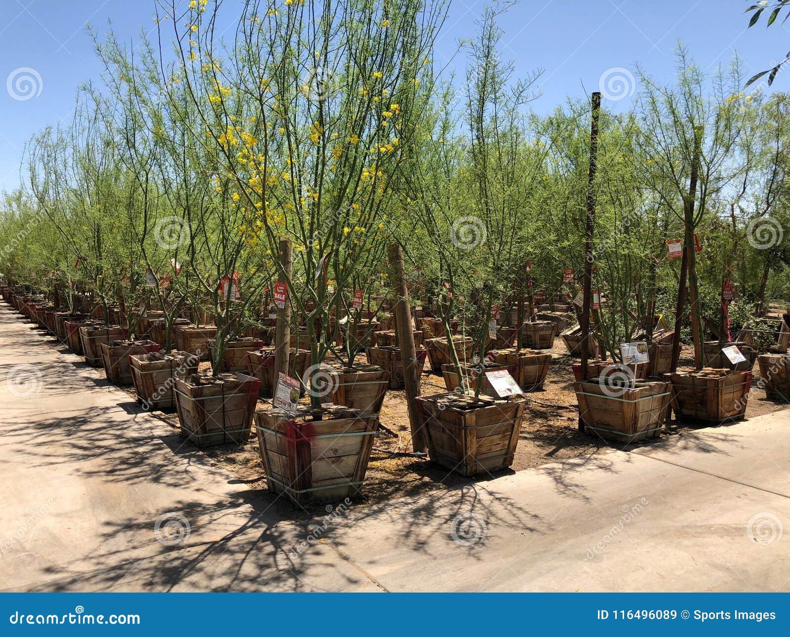 Nursery And Gardening Shop. Editorial Stock Image - Image of gilbert ...