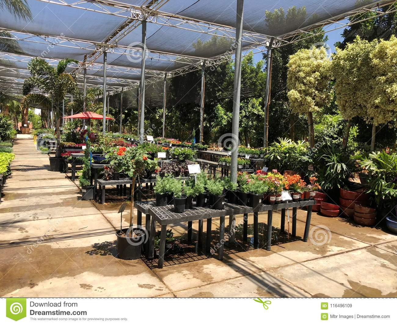 Nursery And Gardening Shop. Editorial Stock Image - Image of