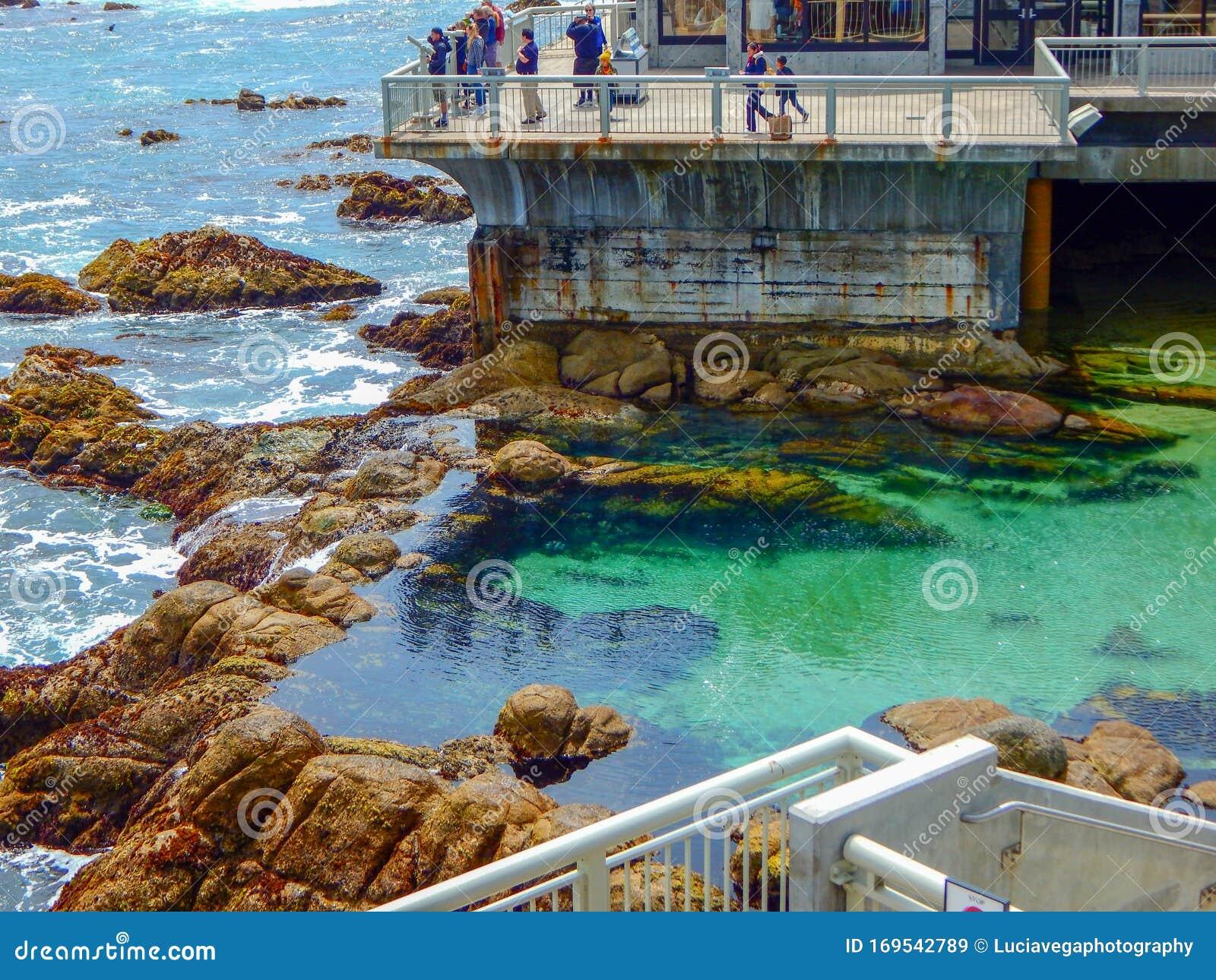 Monterey Bay Aquarium Outdoor View Editorial Stock Image ...