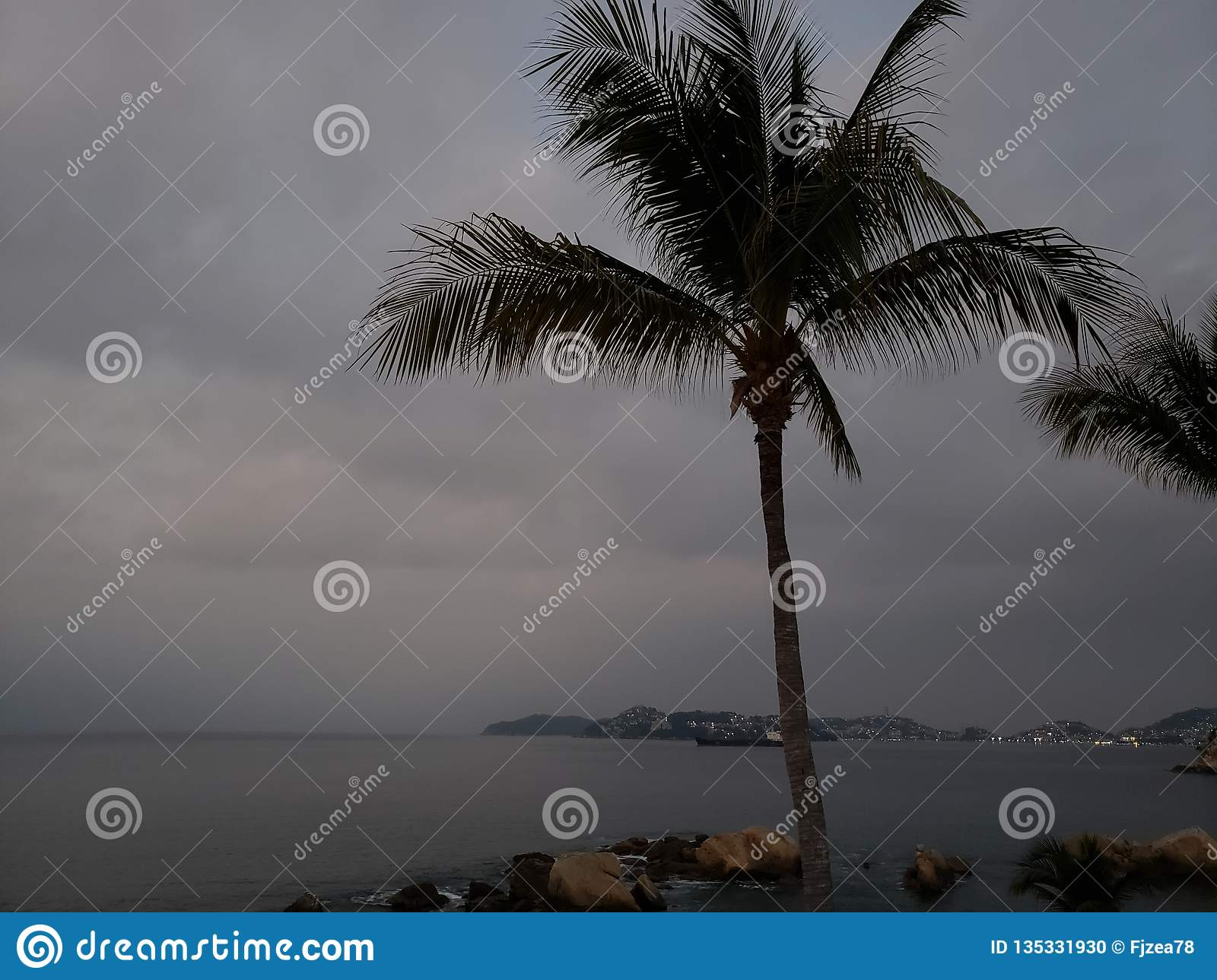tropical landscape with the silhouette of a palm tree on a cloudy day