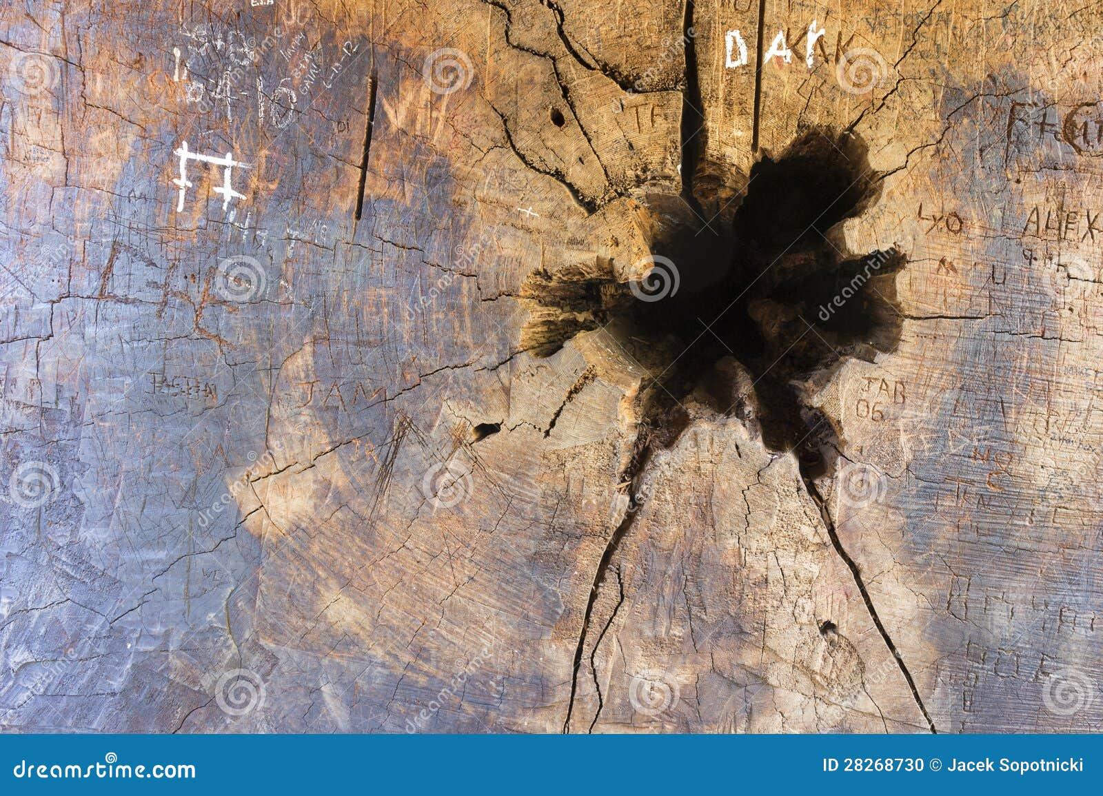 loch im mammutbaum kabel mit zeichen stockfoto bild 28268730. Black Bedroom Furniture Sets. Home Design Ideas