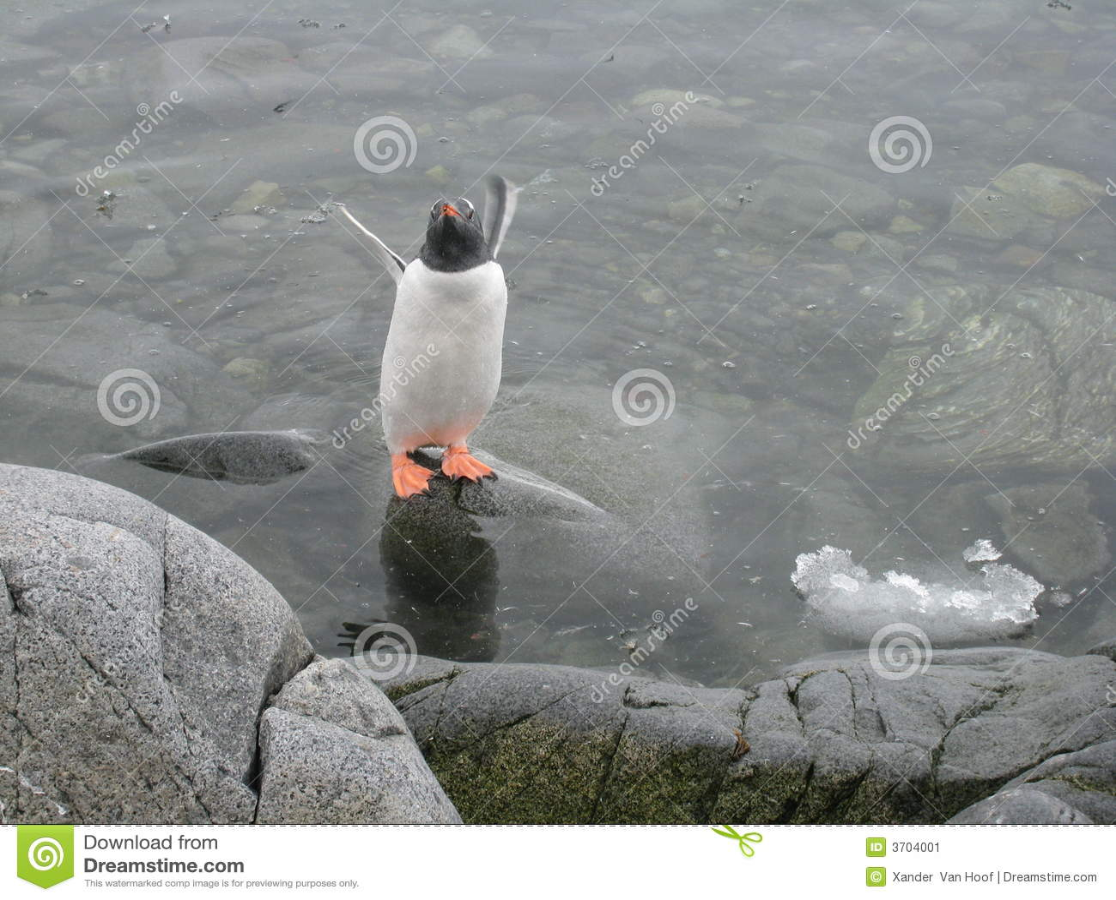 Lockroy λιμένας λιμνών penguin