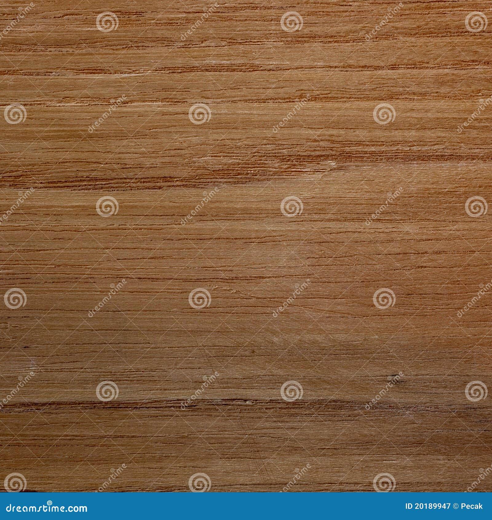 Locusta Nera (pseudoacacia Di Robinia) Immagine Stock - Immagine di ...