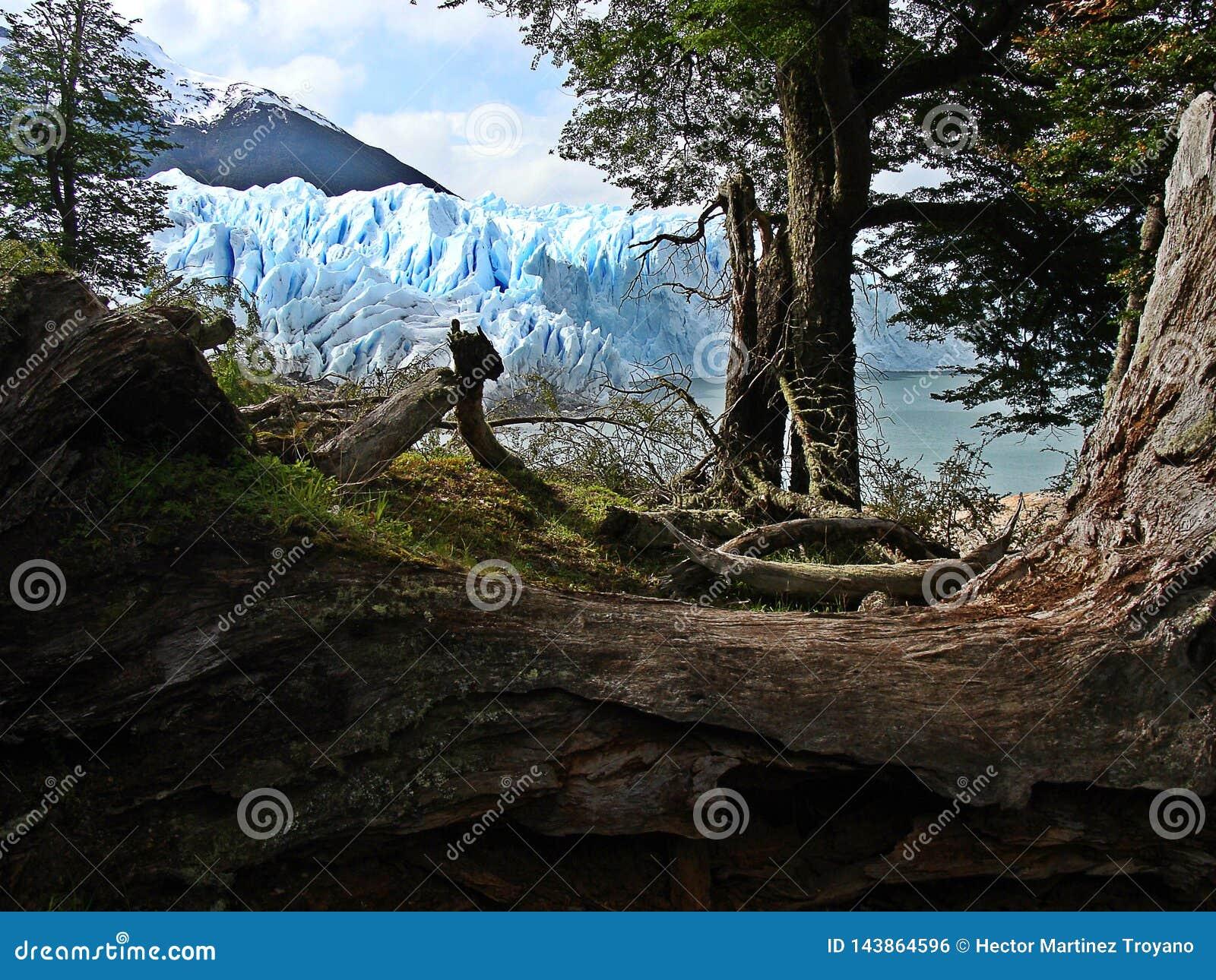 Lodowa perito Moreno
