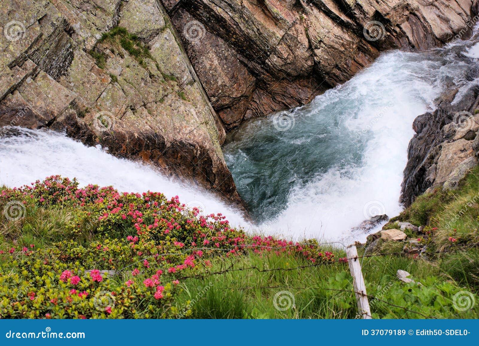 Download Lodowa Strumień I Alpejskie Róże Obraz Stock - Obraz złożonej z stromy, woda: 37079189