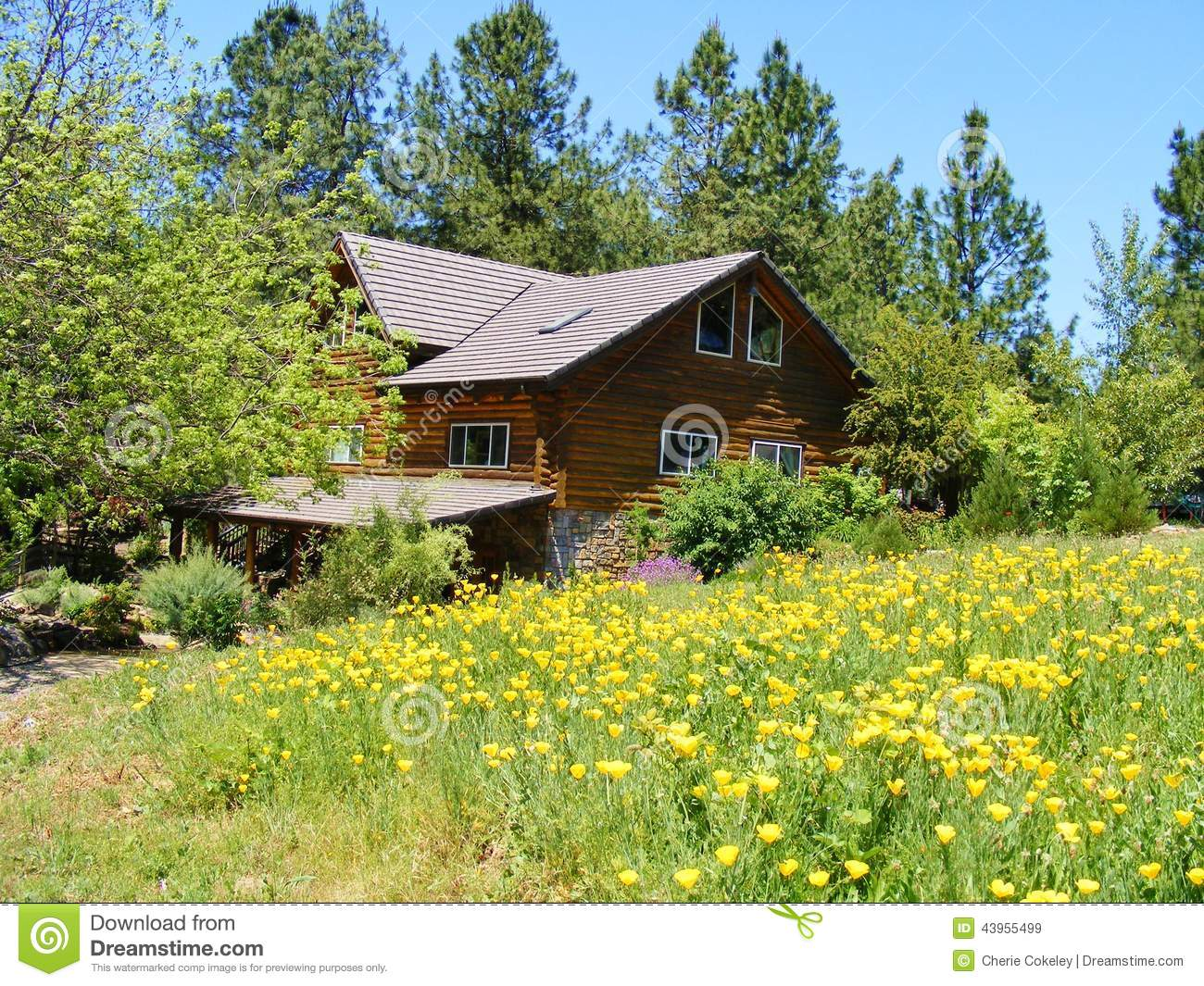 Log Cabin Home In A Country Meadow Of Yellow Poppies Stock