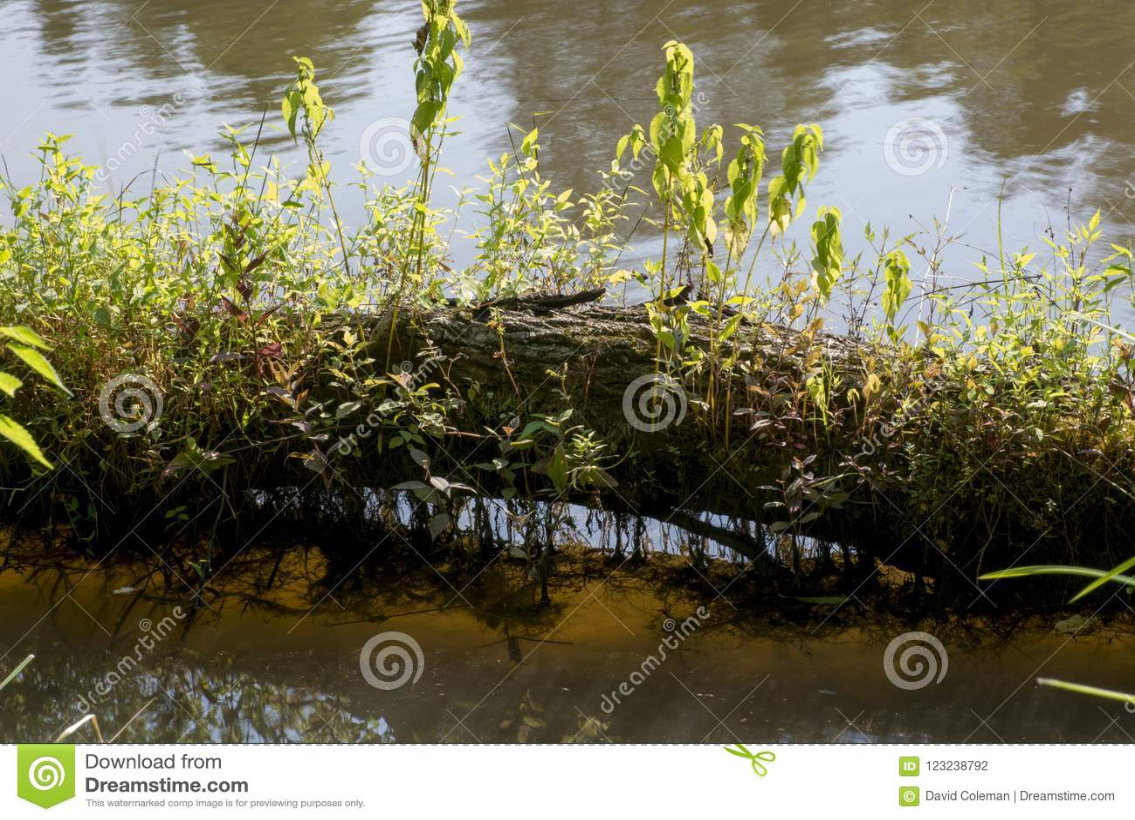 Log com crescimento das plantas