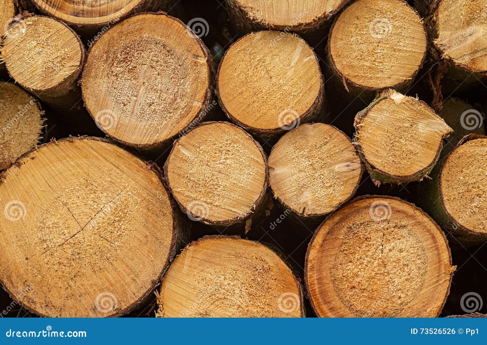 Log lumber timber tree round ring pine spruce tree ring for Pine tree timber