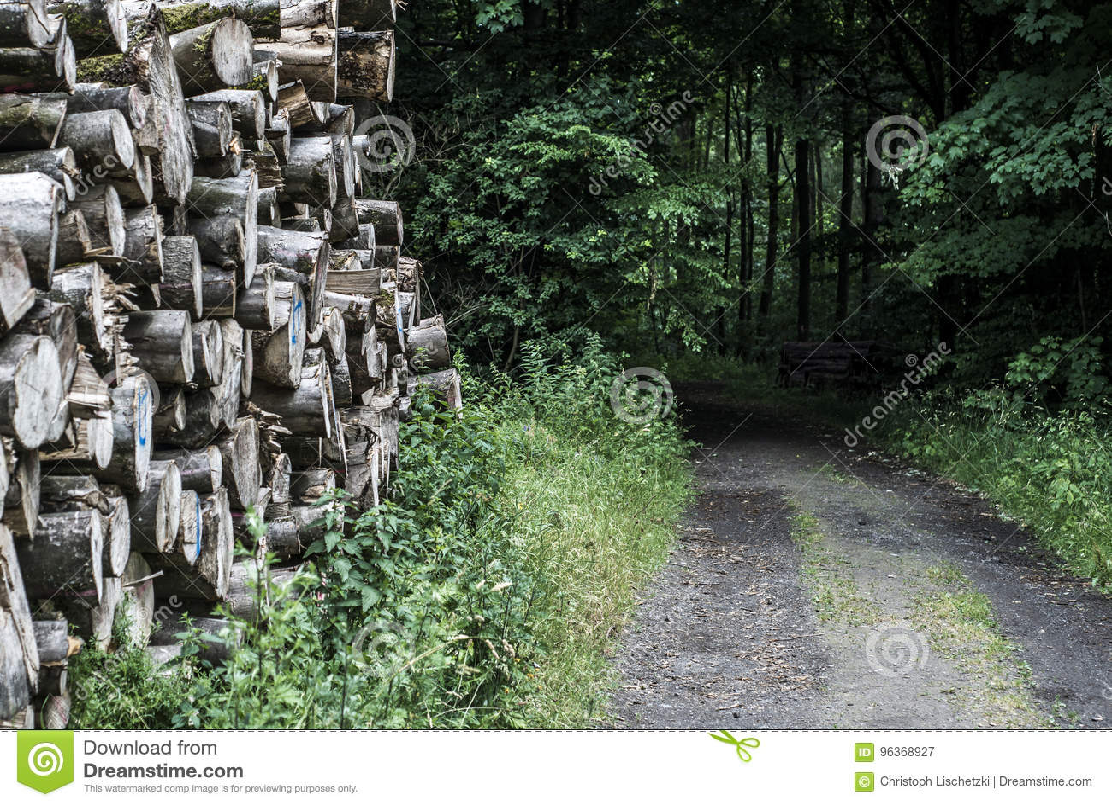Log pile stack forest wood track mud road offroad way puddle landscape background