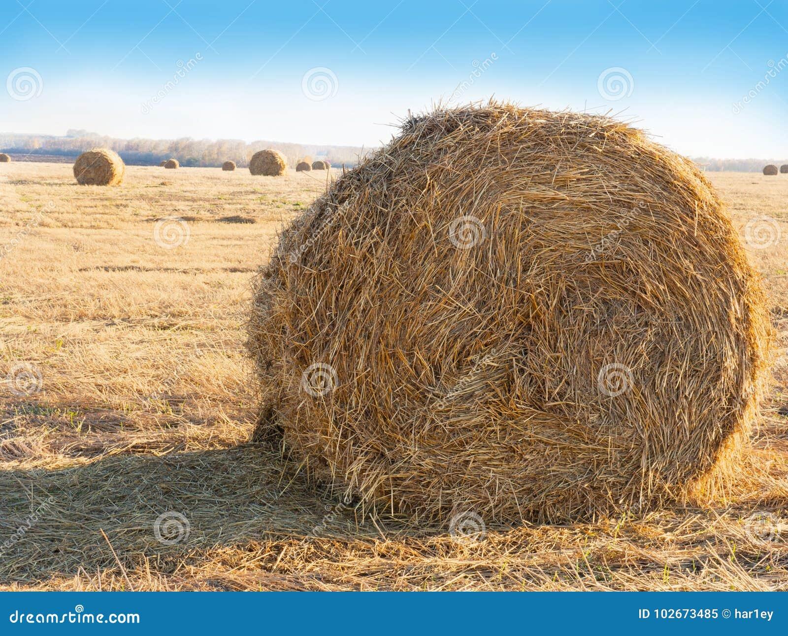 Log siano Rolnictwa pole z niebem Wiejska natura w rolnej ziemi