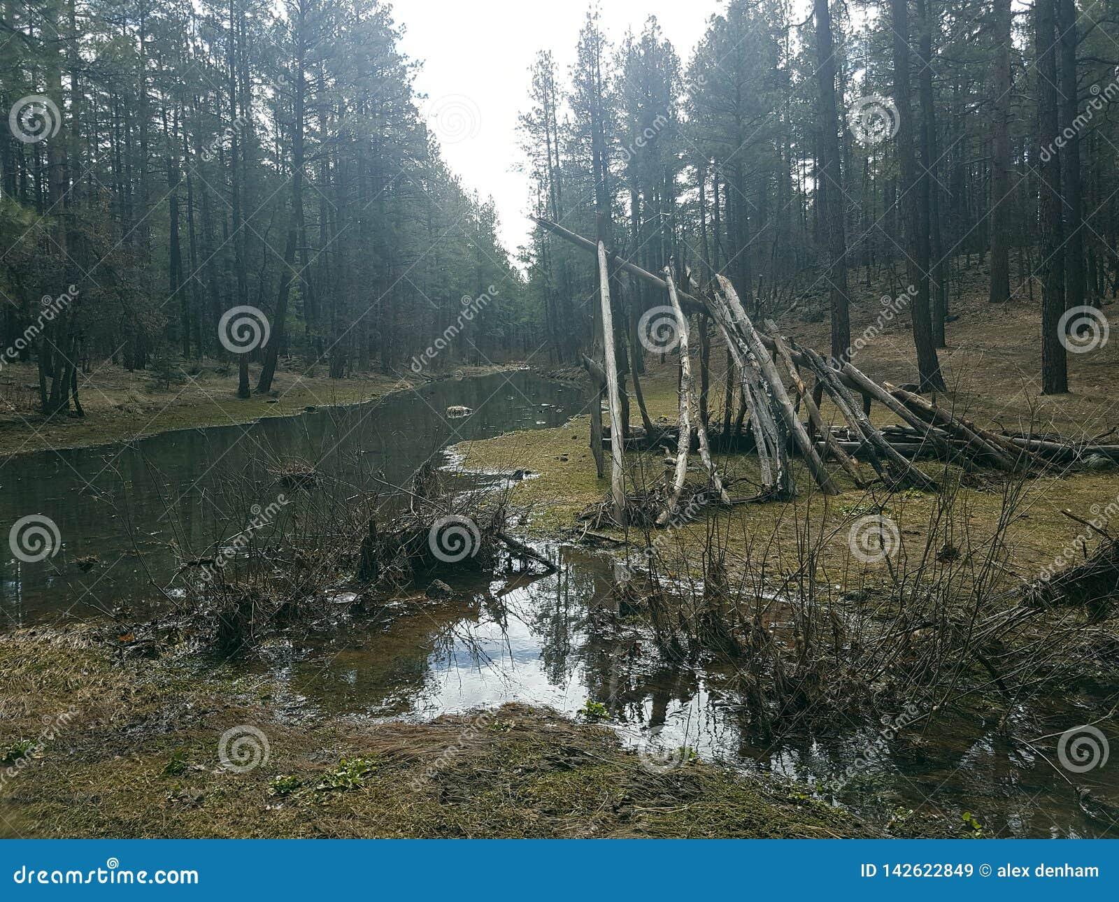 A log teepee next to the Creek
