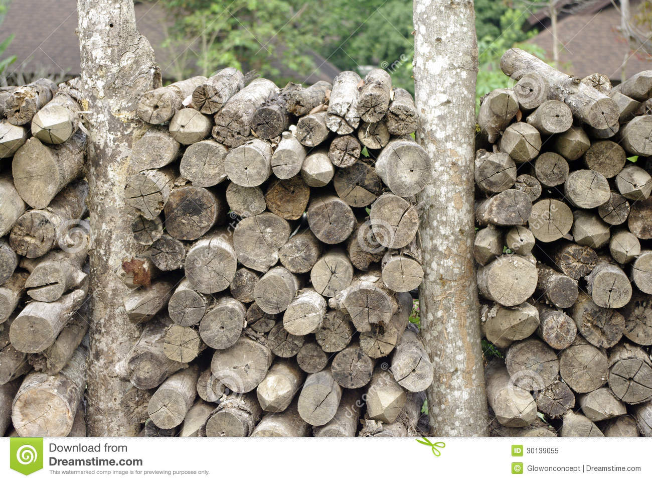 Wood Elevation Texture : Log wood cut texture royalty free stock photo image