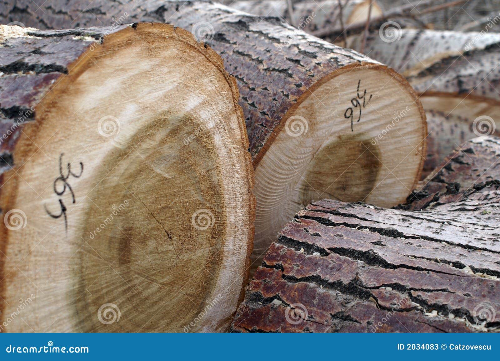 Logarithmes naturels d arbre