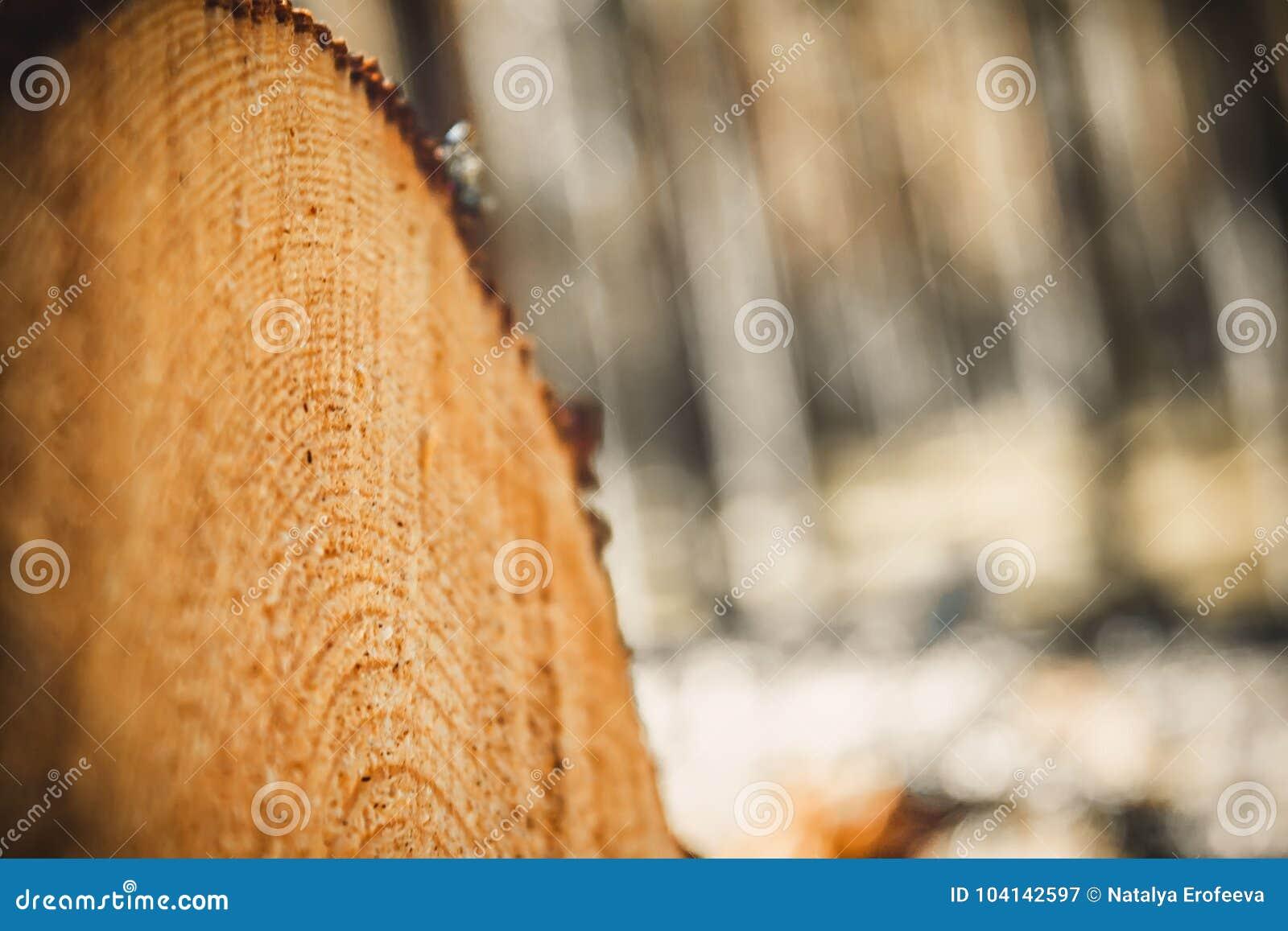 Logboeken van bomen in het bos na het felling Felled boomboomstammen registreren Selectieve nadruk op foto