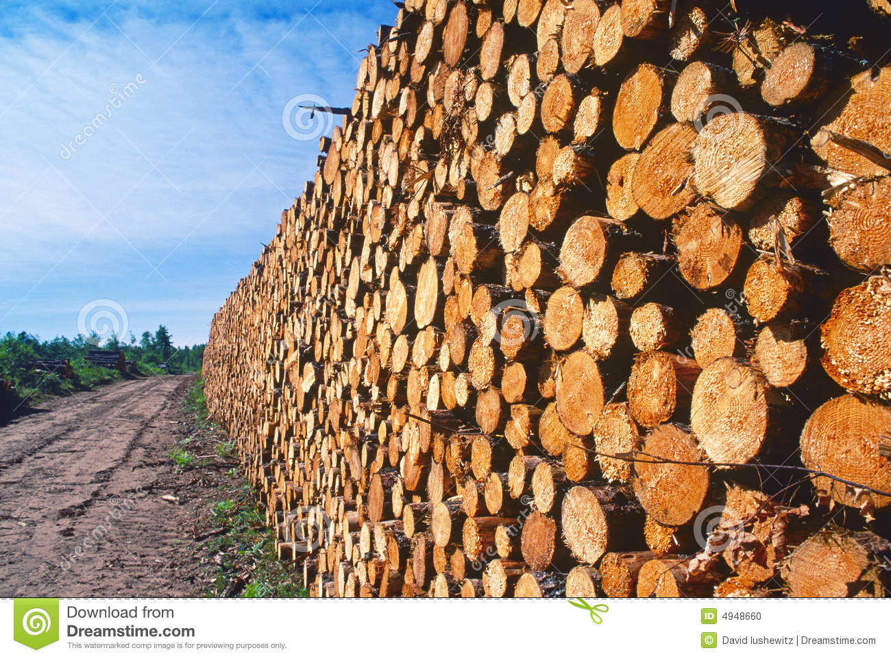 Logging pine log piles stock photo image of forests for Tree log