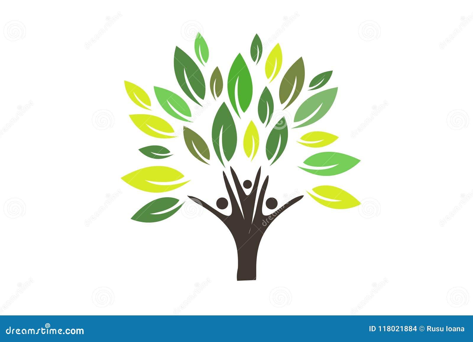 Logo D Arbre Genealogique Illustration De Vecteur Illustration Du
