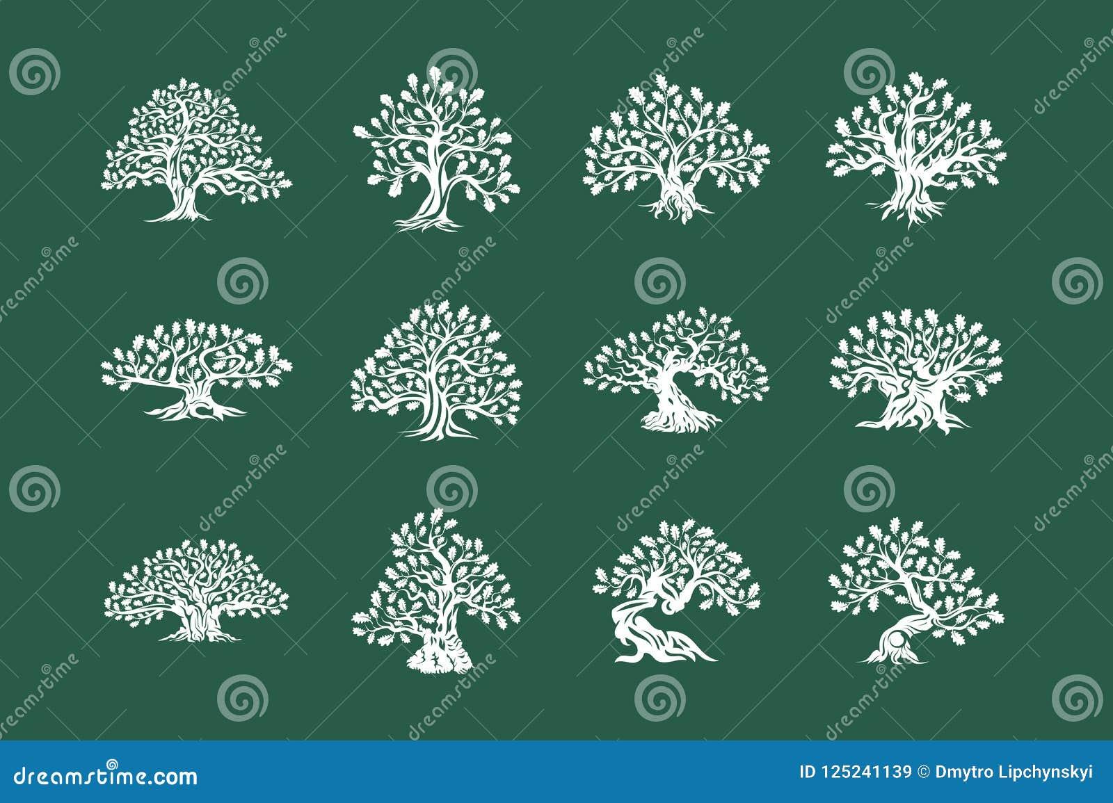 Logo enorme e sacro della siluetta della pianta della quercia isolato sull insieme verde del fondo