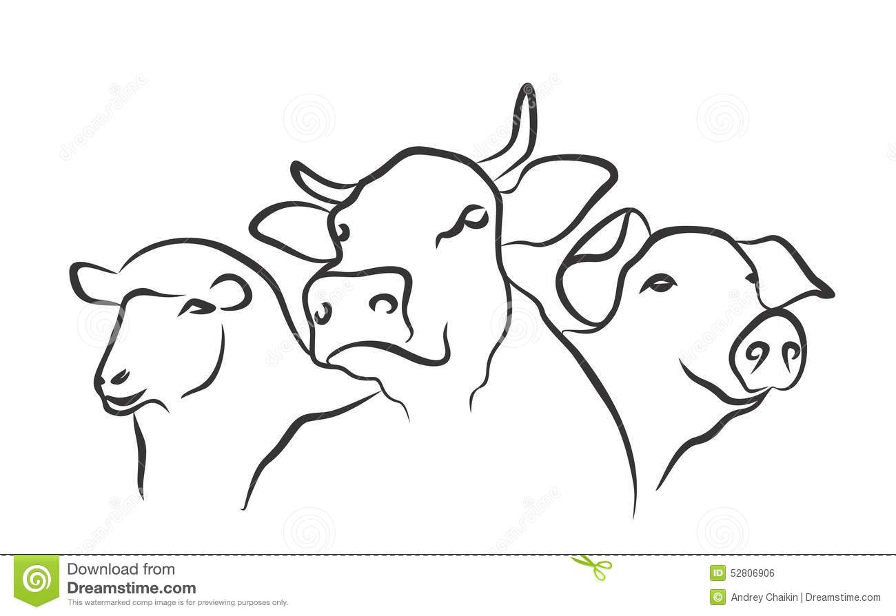 Cow Butcher Diagram Cut Beef Set 480382762 moreover Beef Cattle Cartoon together with X6114e04 together with 99968 Beef Grill Icons as well Body Parts Of Chicken. on cow meat diagram