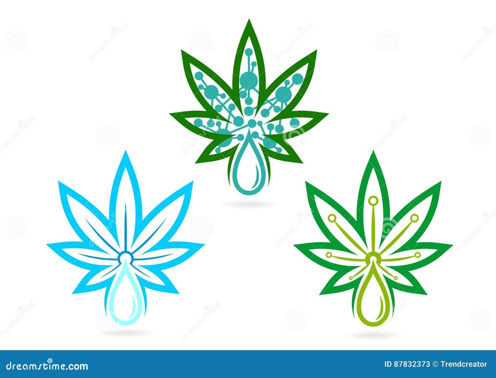 Logotipo de la hoja infusiones, hierba, skincare, marijuana, símbolo, icono del cáñamo, remedio, y diseño de concepto de la hoja