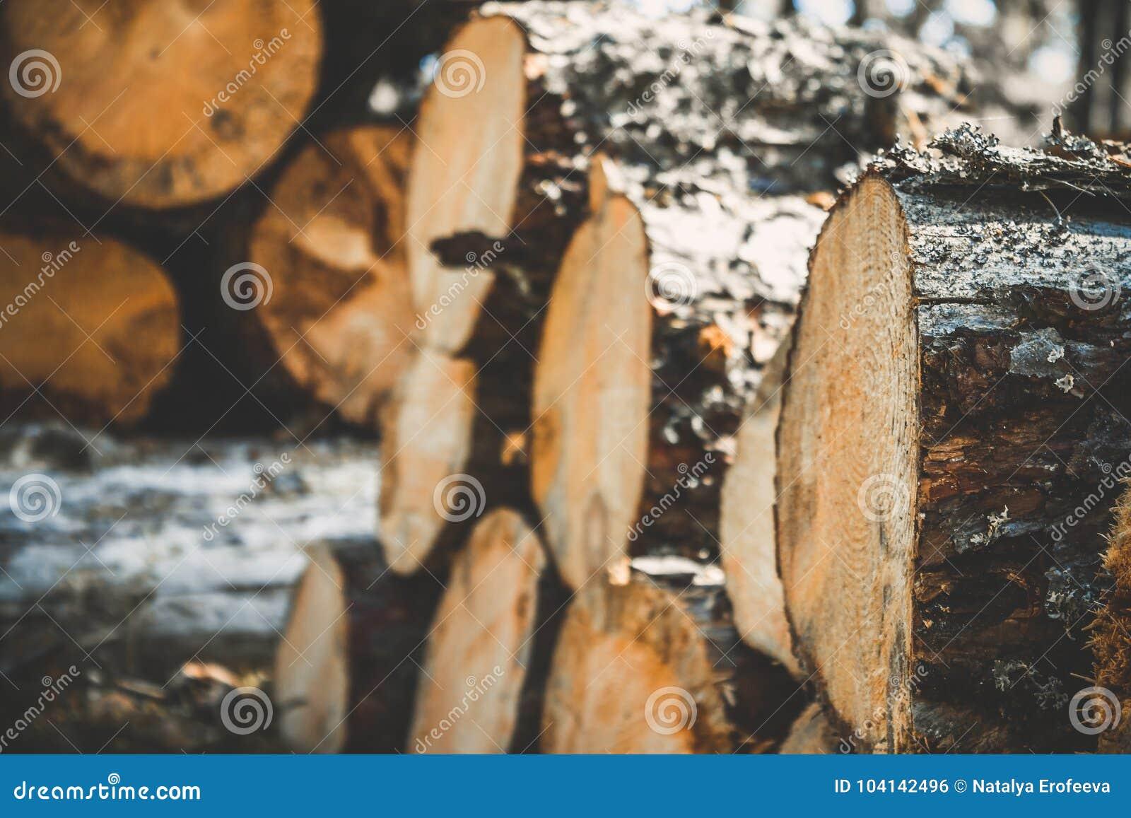 Logs das árvores na floresta após abater Troncos de árvore abatidos registrar Foco seletivo na foto
